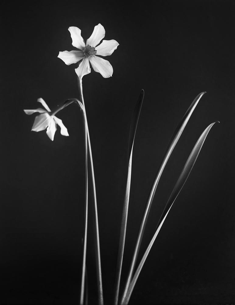 Paperwhite.jpg