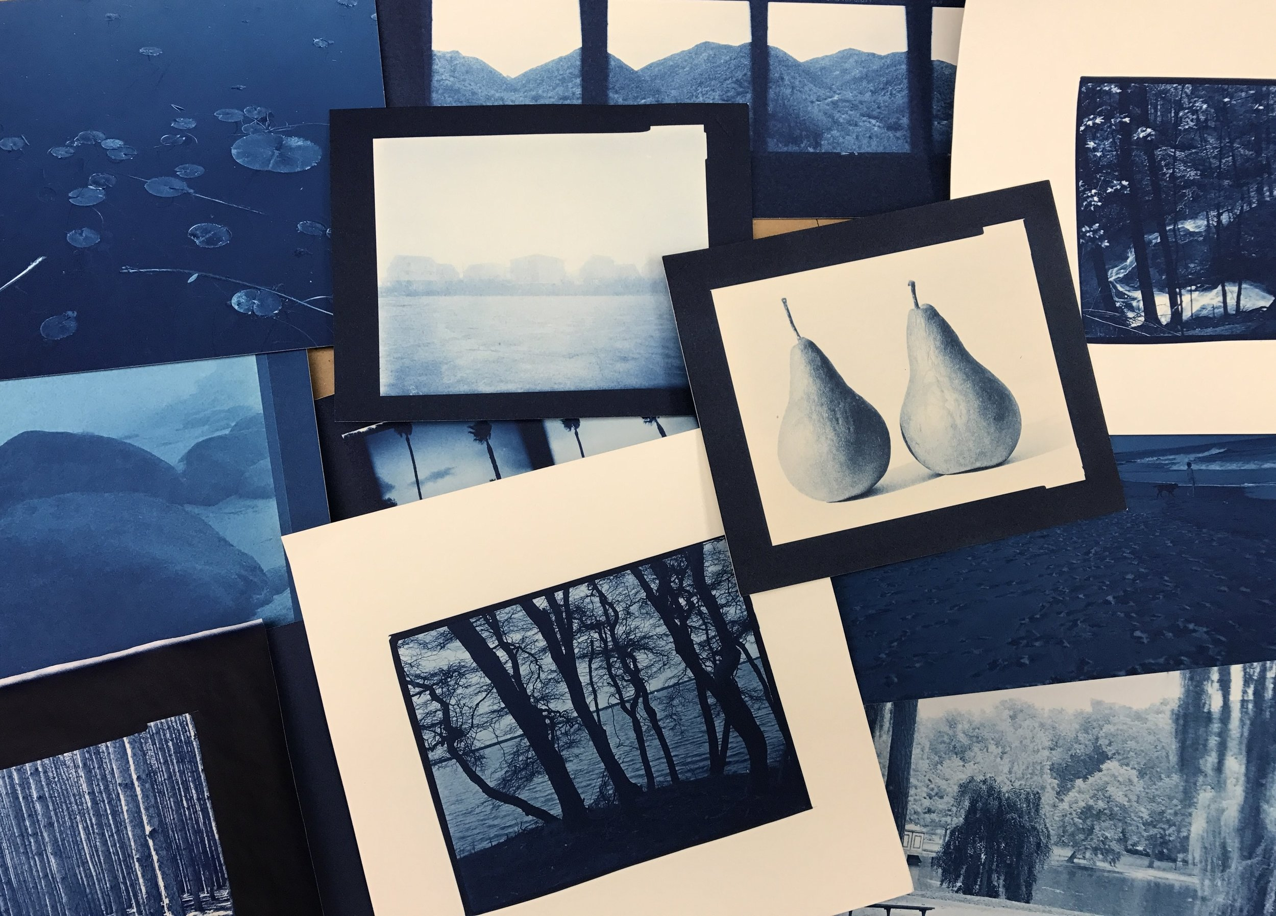 Summer of Cyanotypes