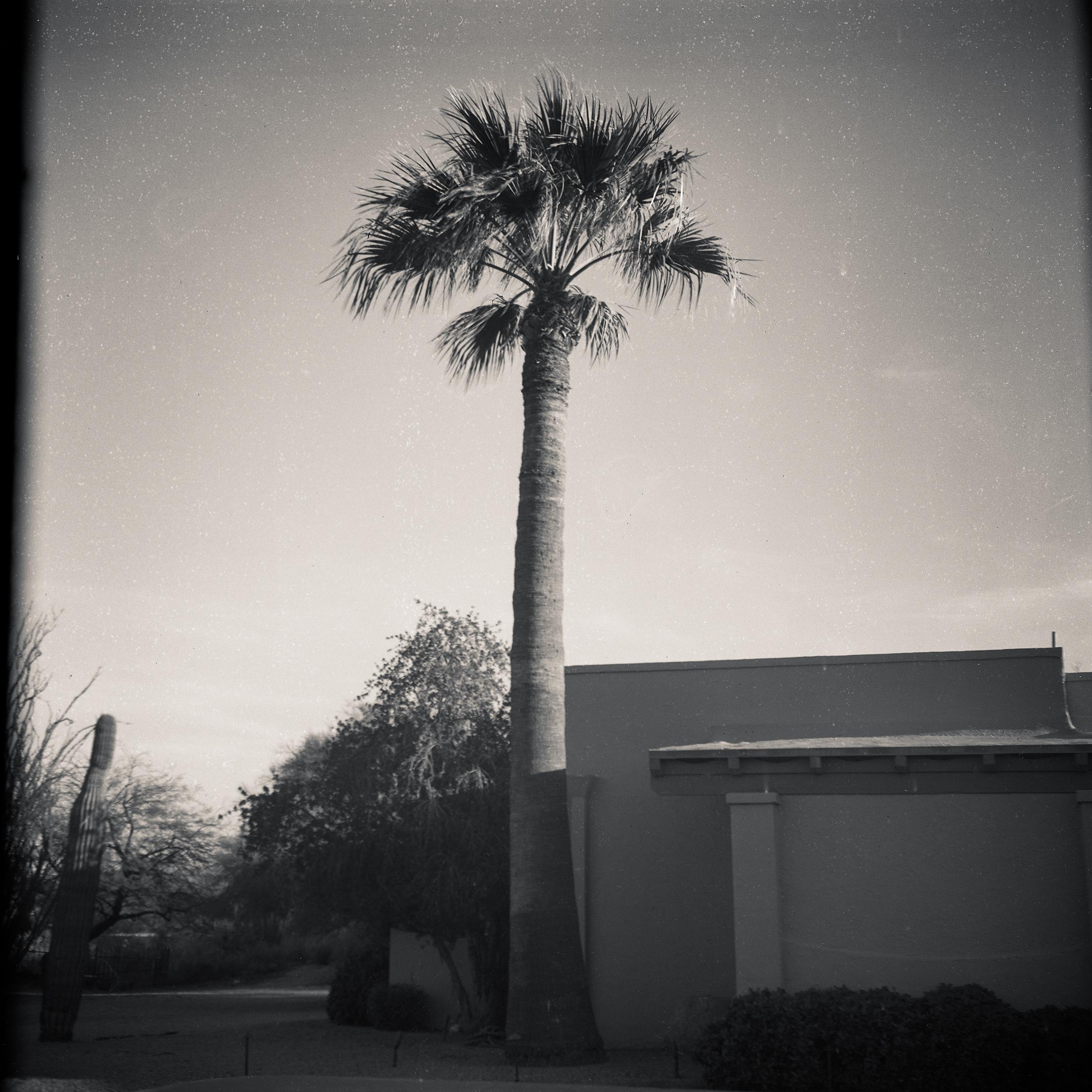 PalmHouse012.jpg