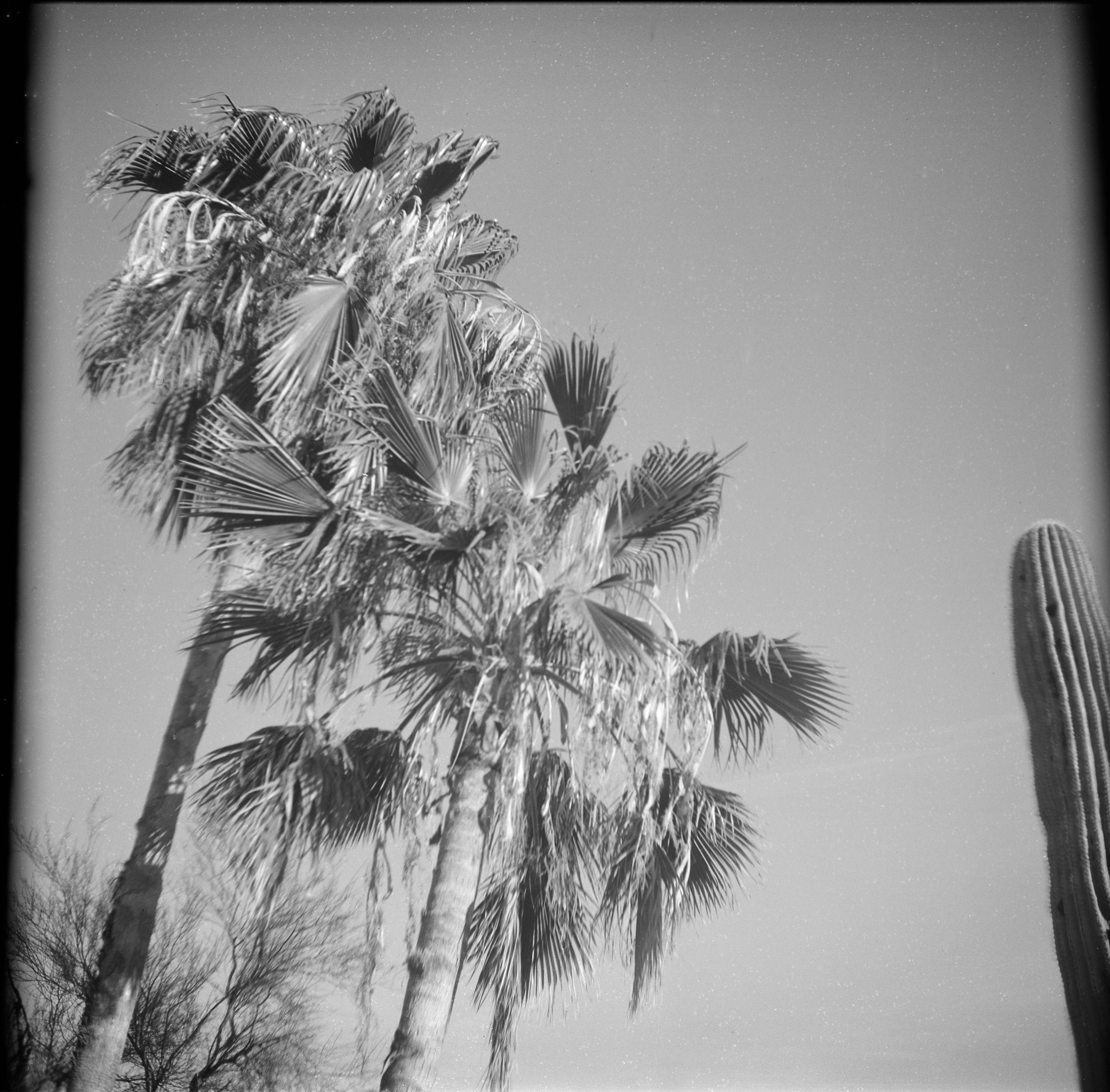 Palm_Cactus005.jpg