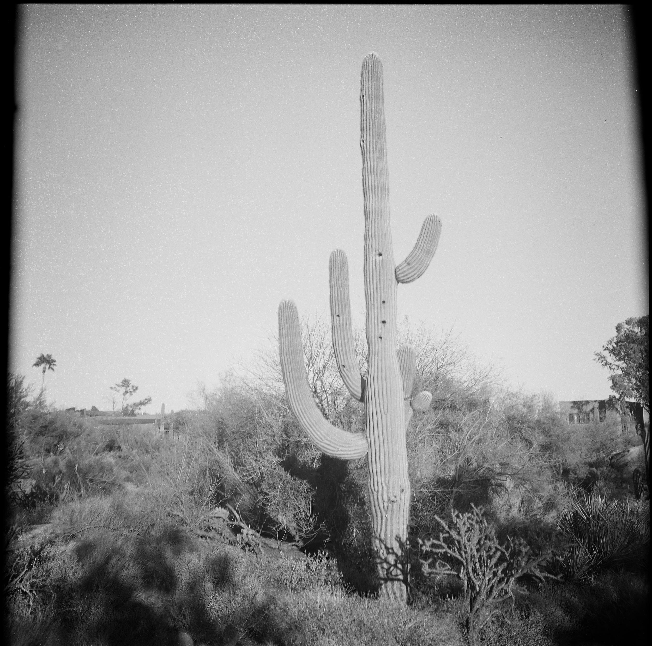 Cactus011.jpg