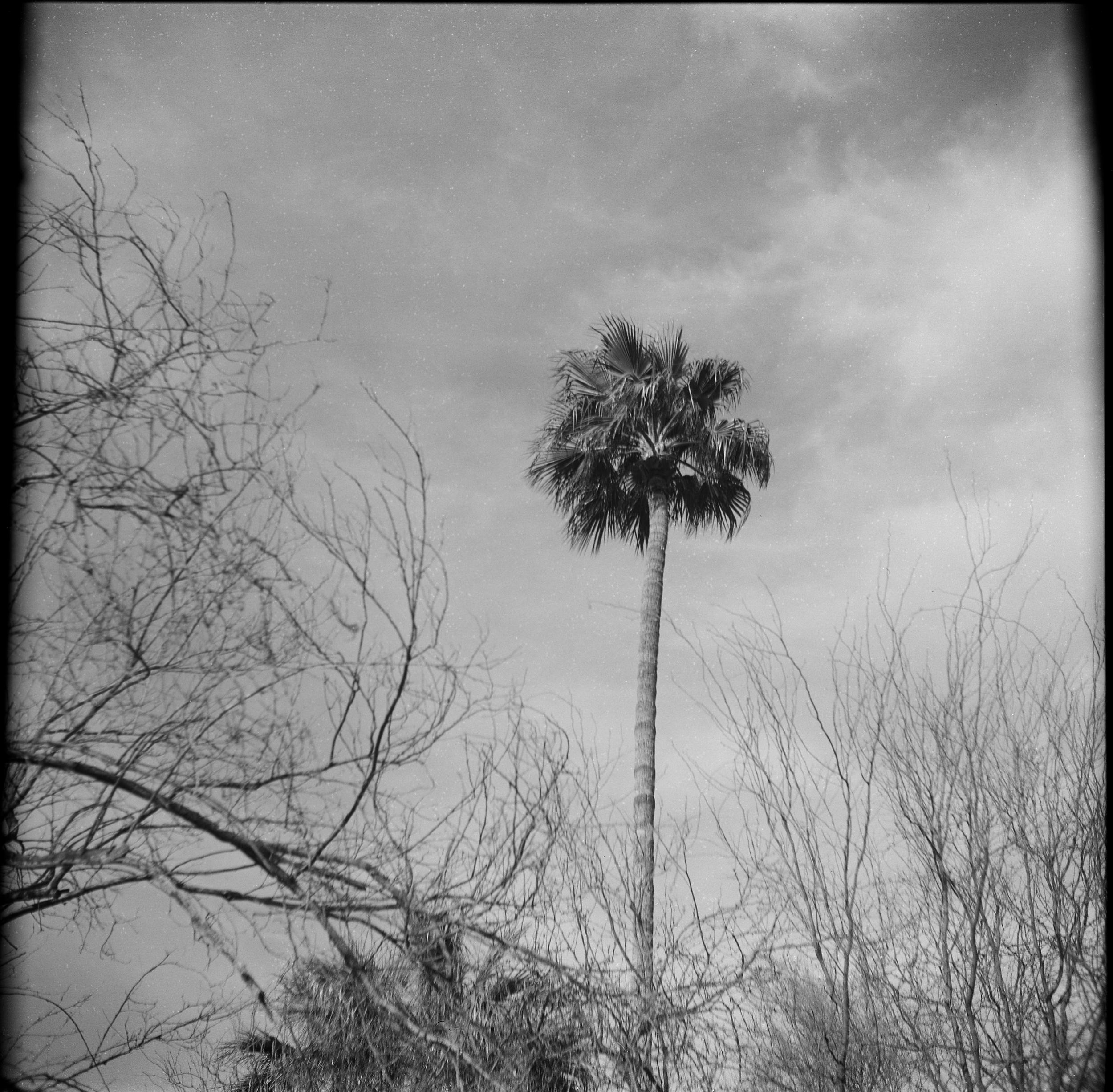 Palm_Cactus006.png