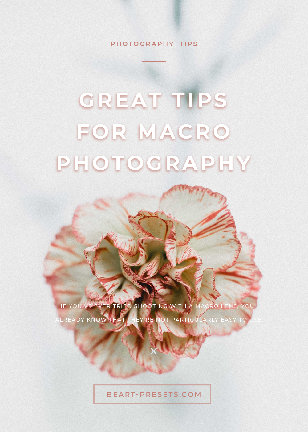 tips for great macro photos