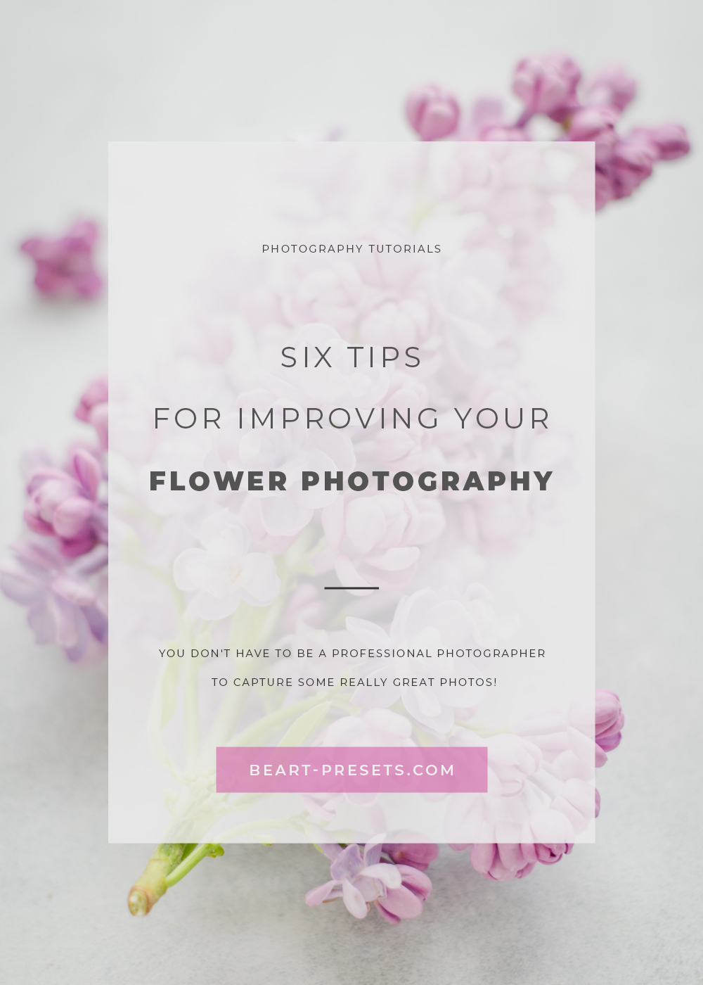 IMPROVING YOUR FLOWER PHOTOGRAPHY