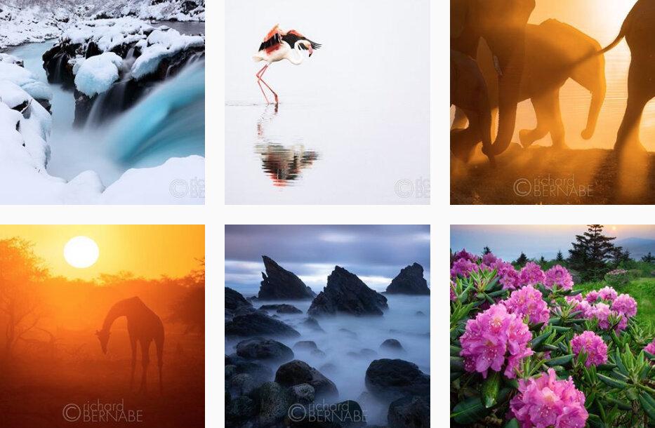 photos from safary