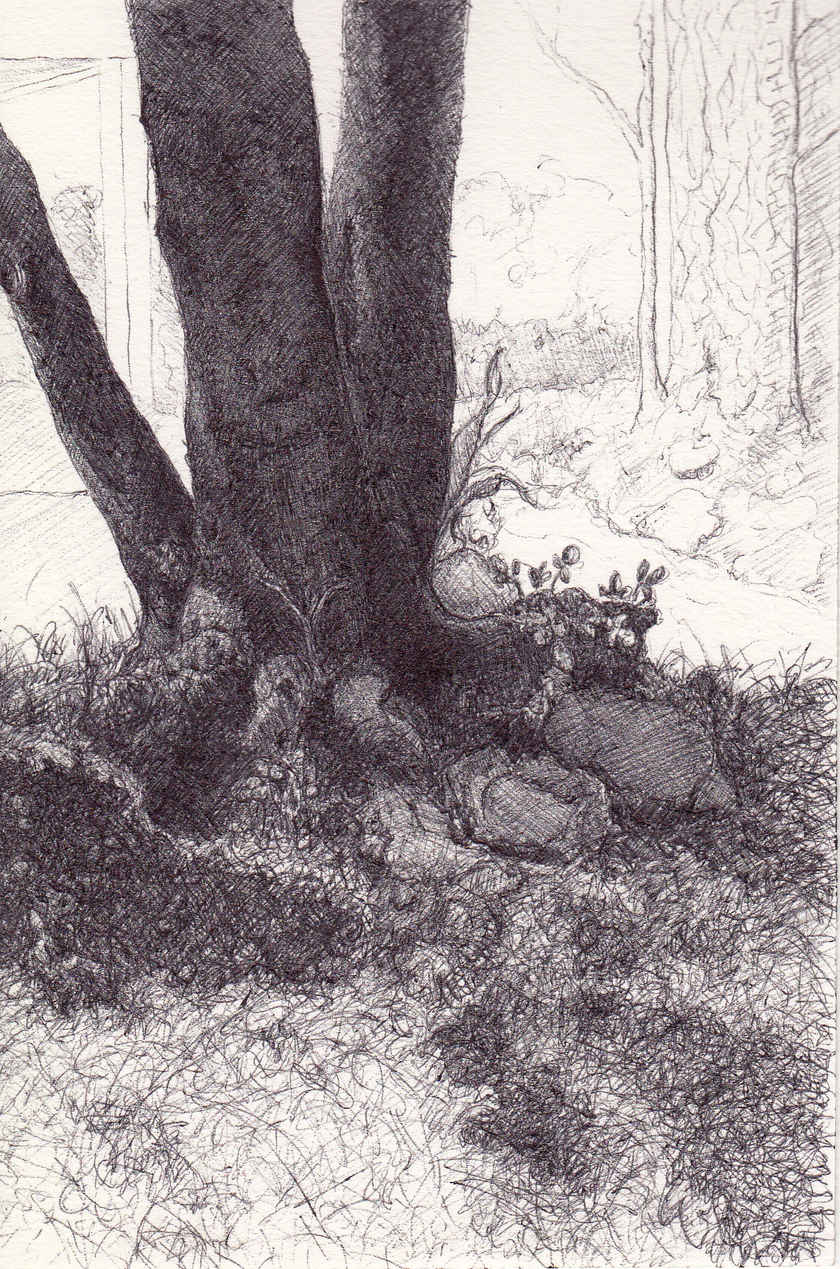 "Rosie's Tree, 4"" 6"", ball point pen, 2014"