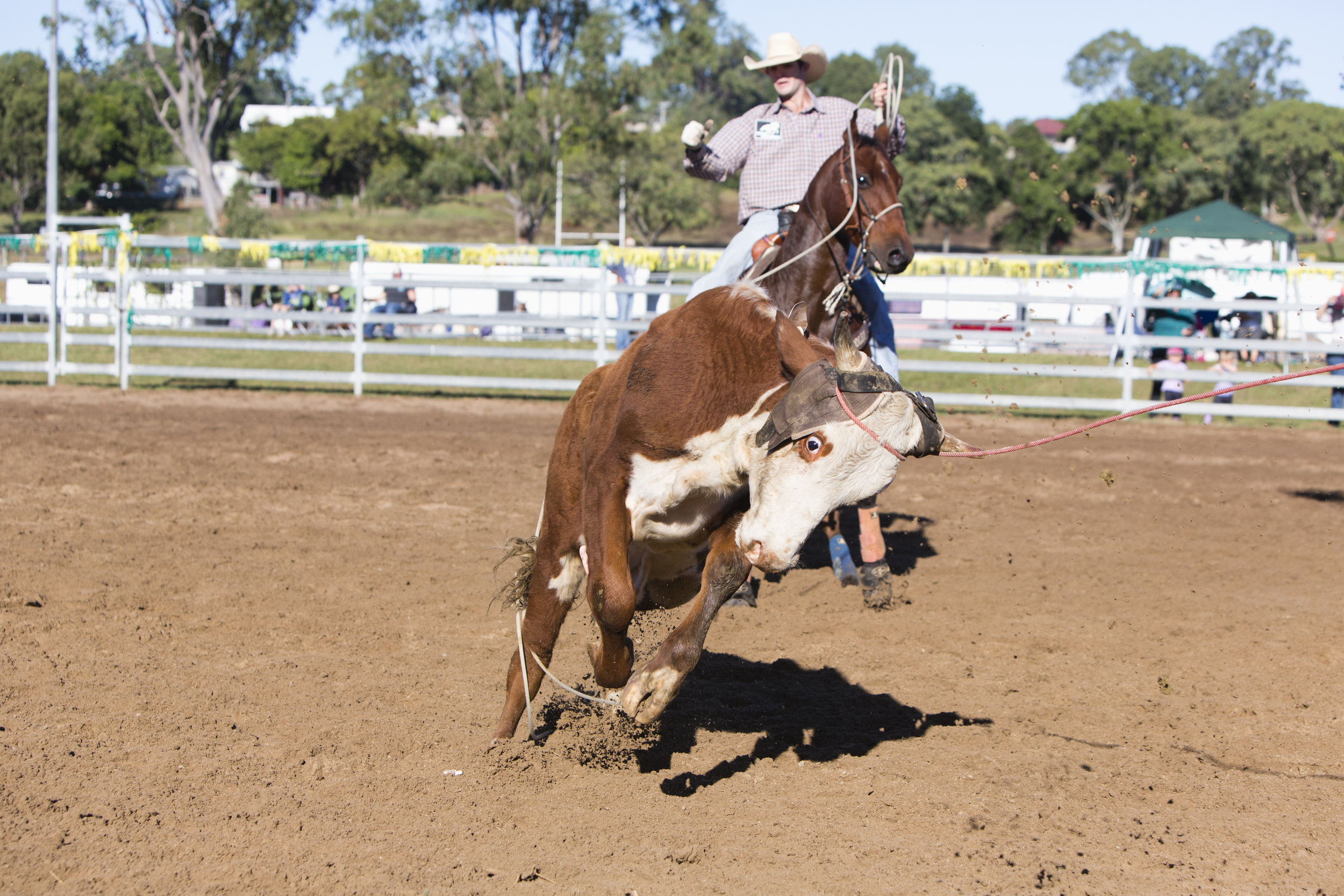 dayboro.rodeo.april30.2017-0048.jpg