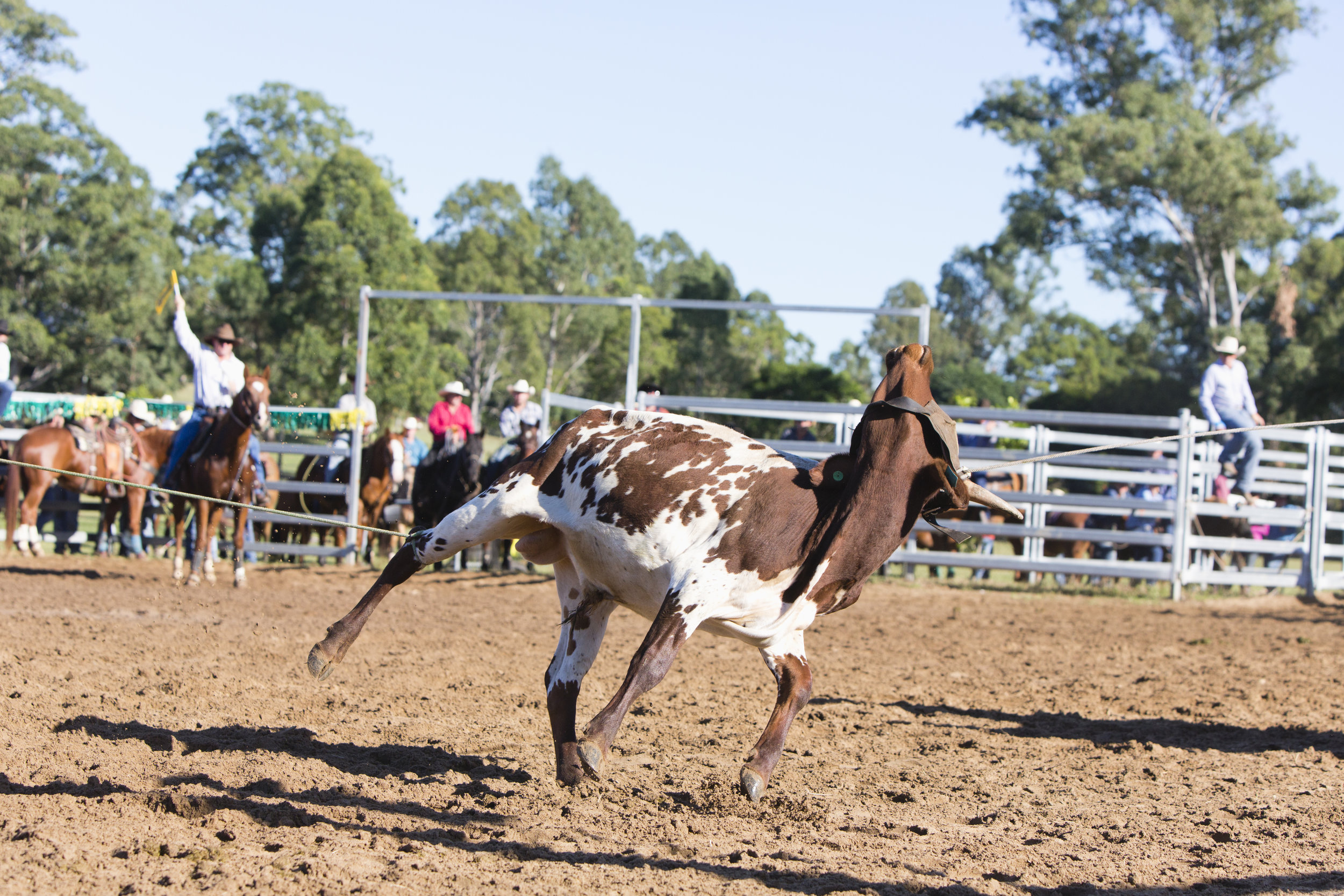 dayboro.rodeo.april30.2017-0062.jpg