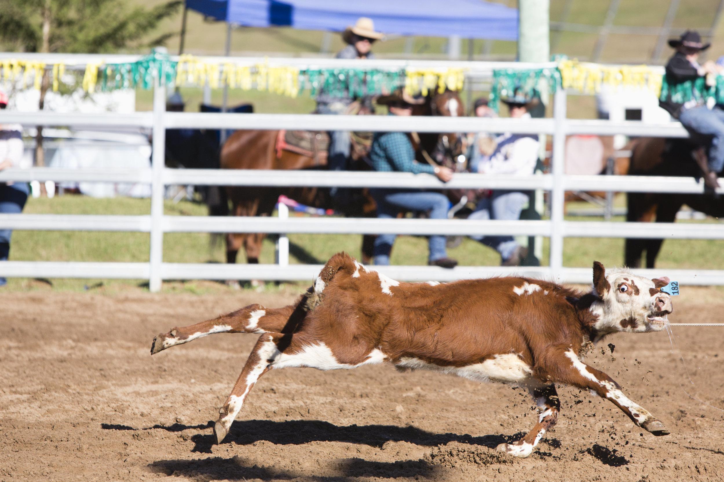 dayboro.rodeo.april30.2017-0098.jpg