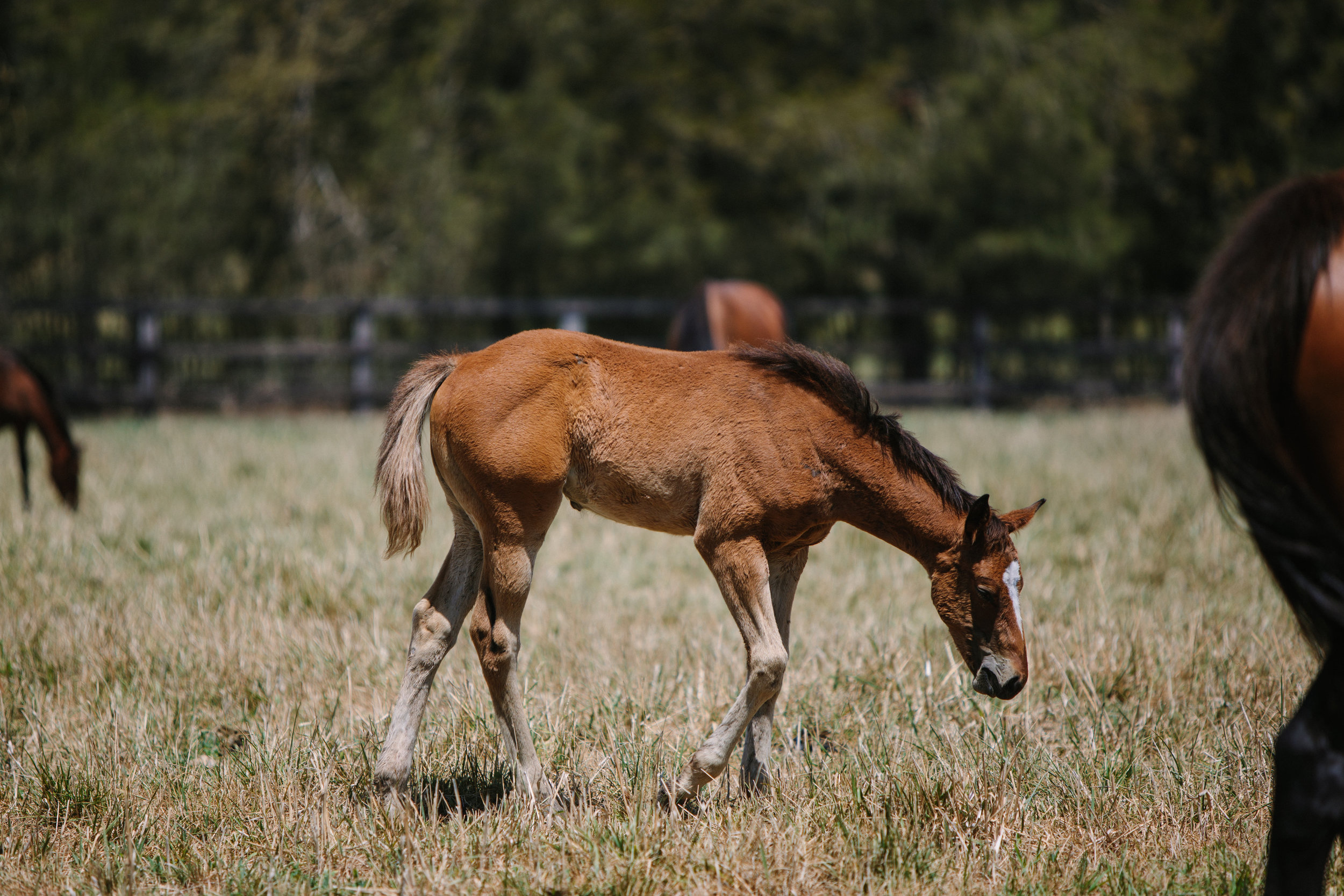 CPR,Jan'19Arrowfield-Killmore,Mare's&Foals-0001.jpg