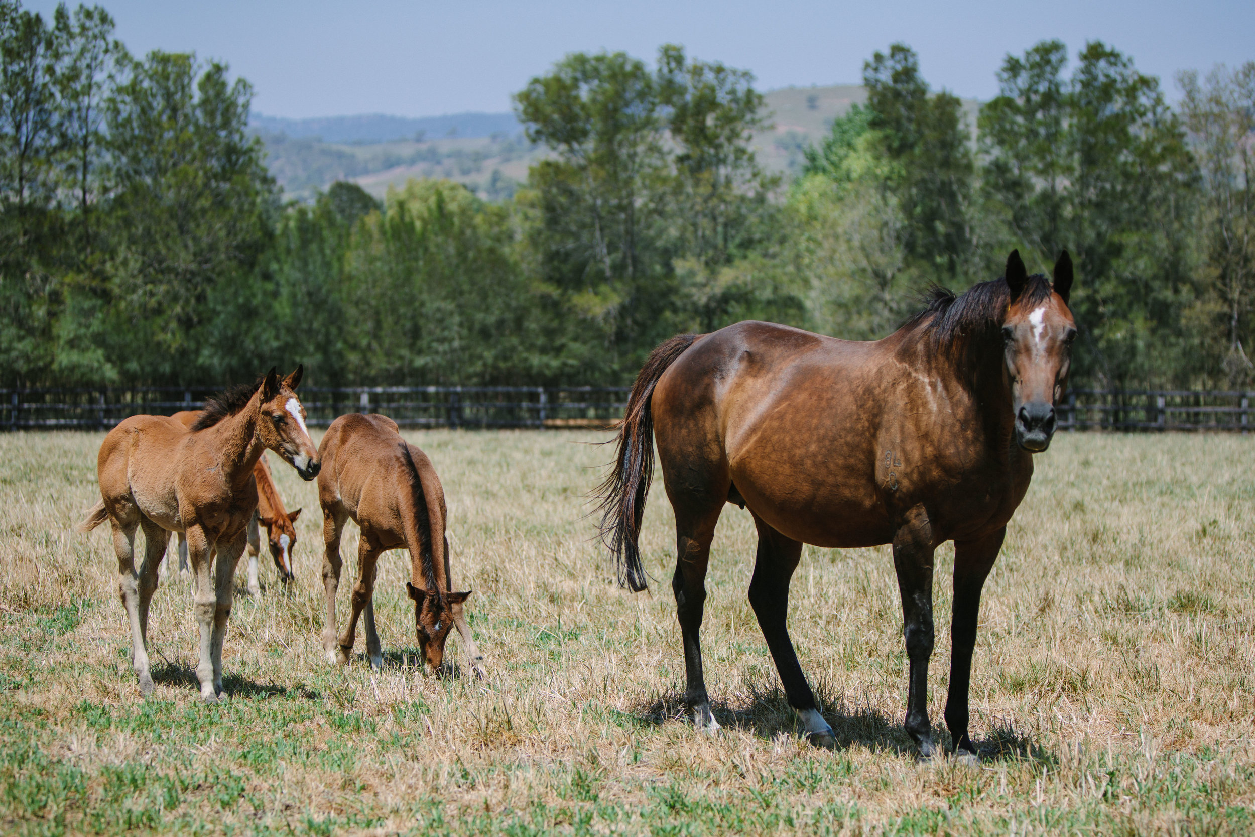 CPR,Jan'19Arrowfield-Killmore,Mare's&Foals-0008.jpg