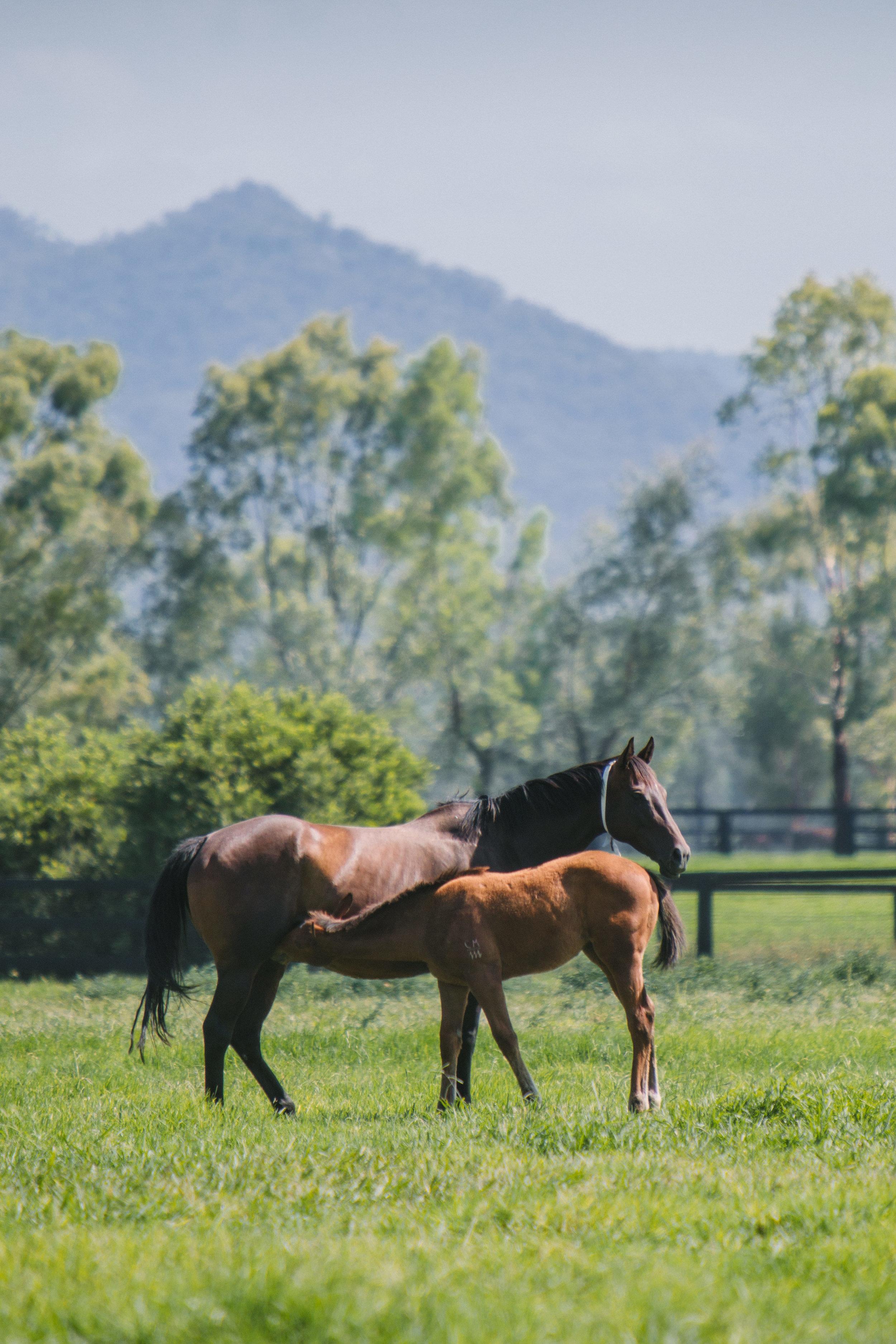 CPR,Jan'19Arrowfield-Killmore,Mare's&Foals-0013.jpg
