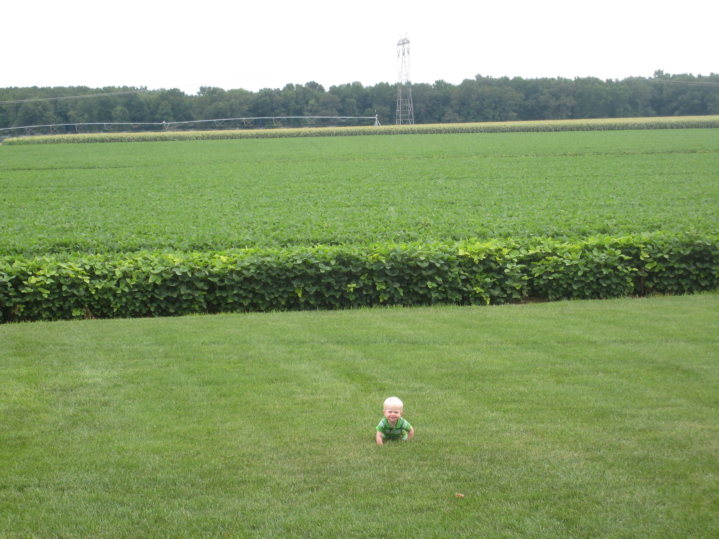Lee Coombs in front of soybeans at Joe Coombs Farm, 2010
