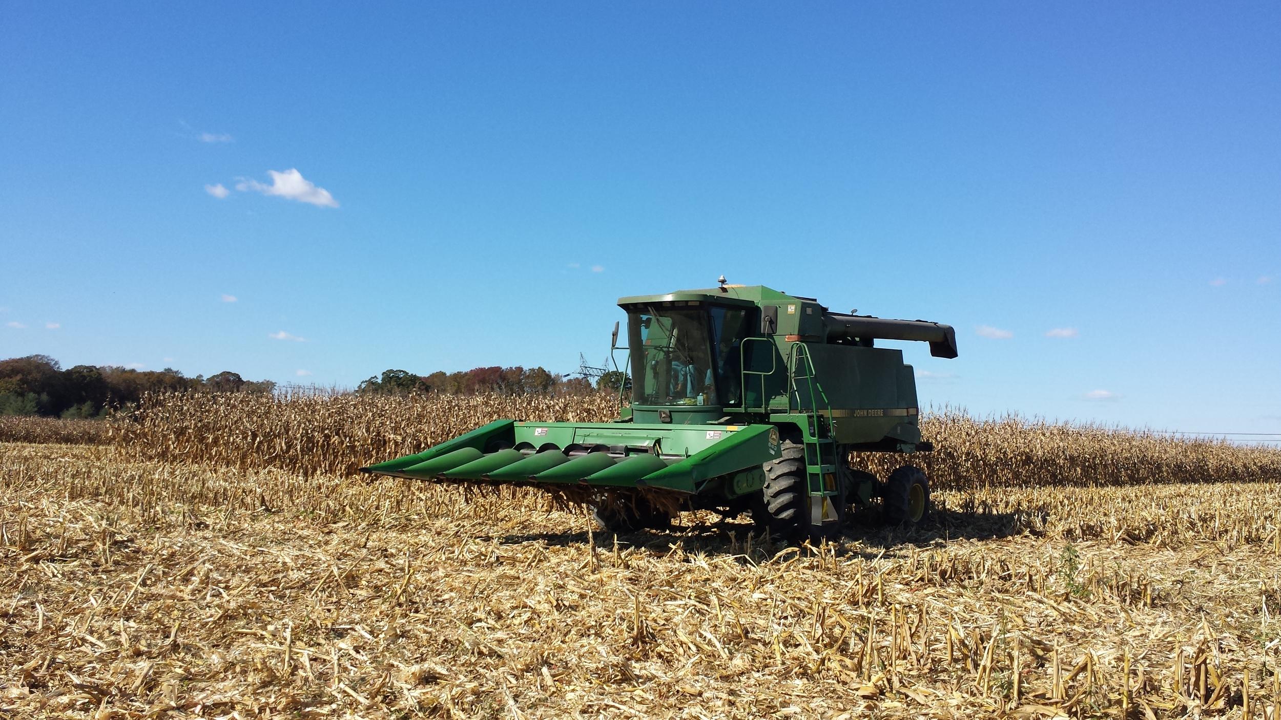 Combining corn 2014