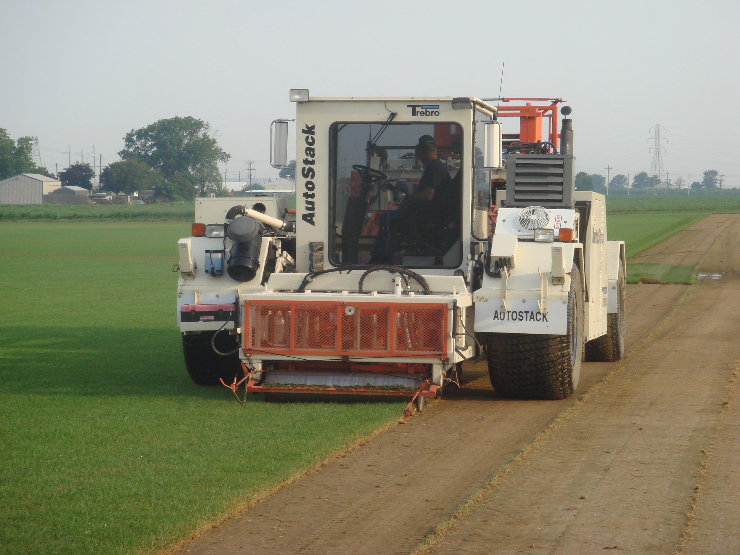 harvesting bluegrass