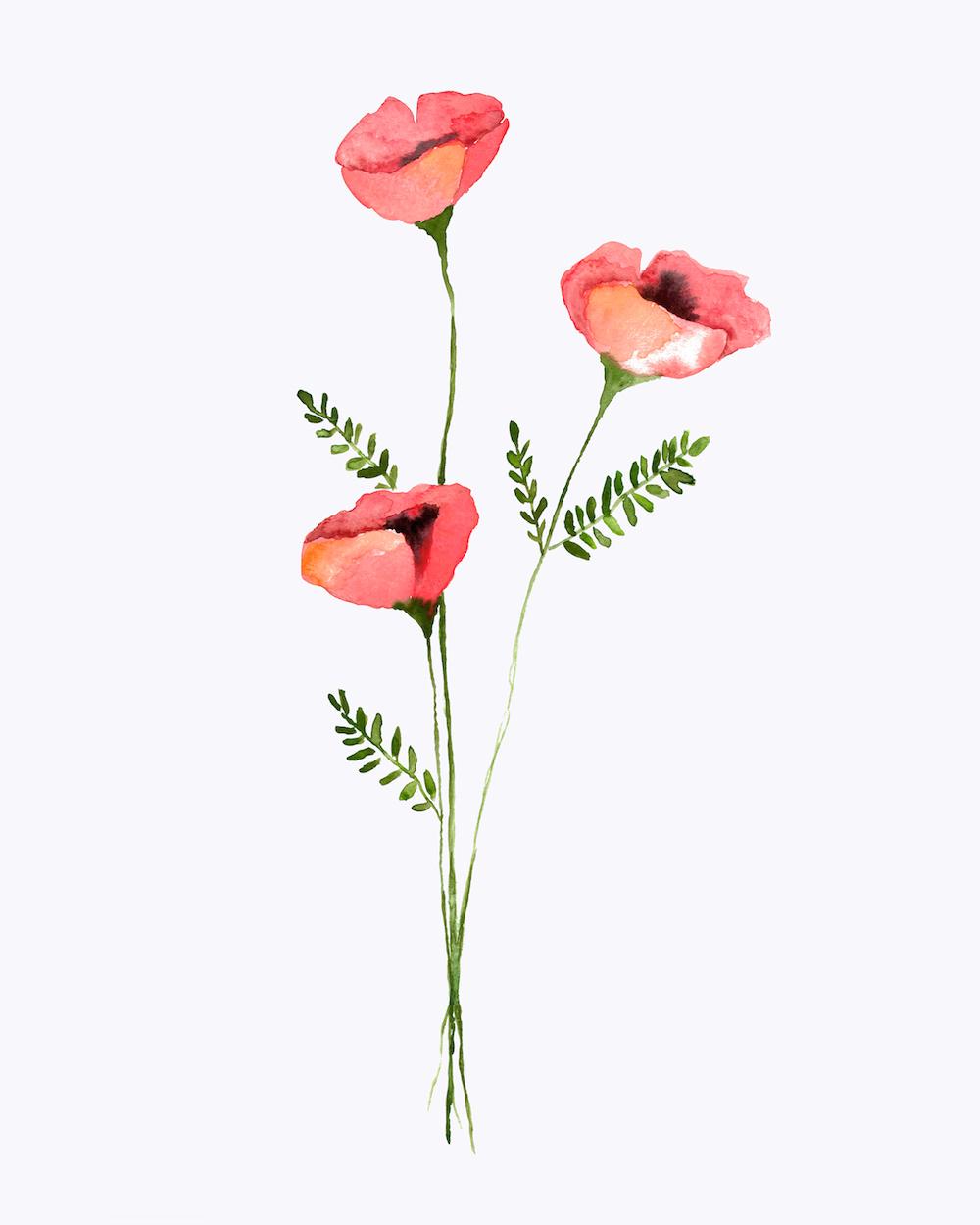 poppy stems.jpg