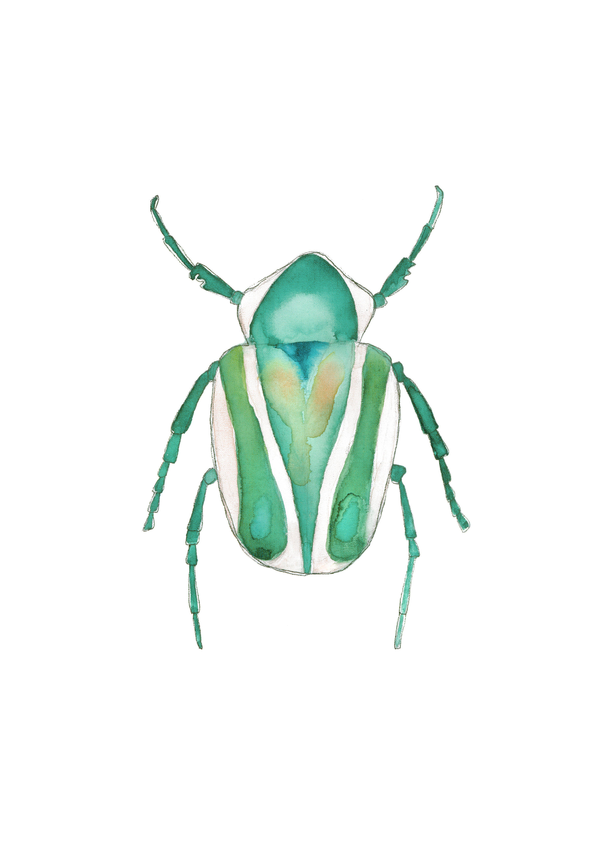 beetle green and pink.jpg
