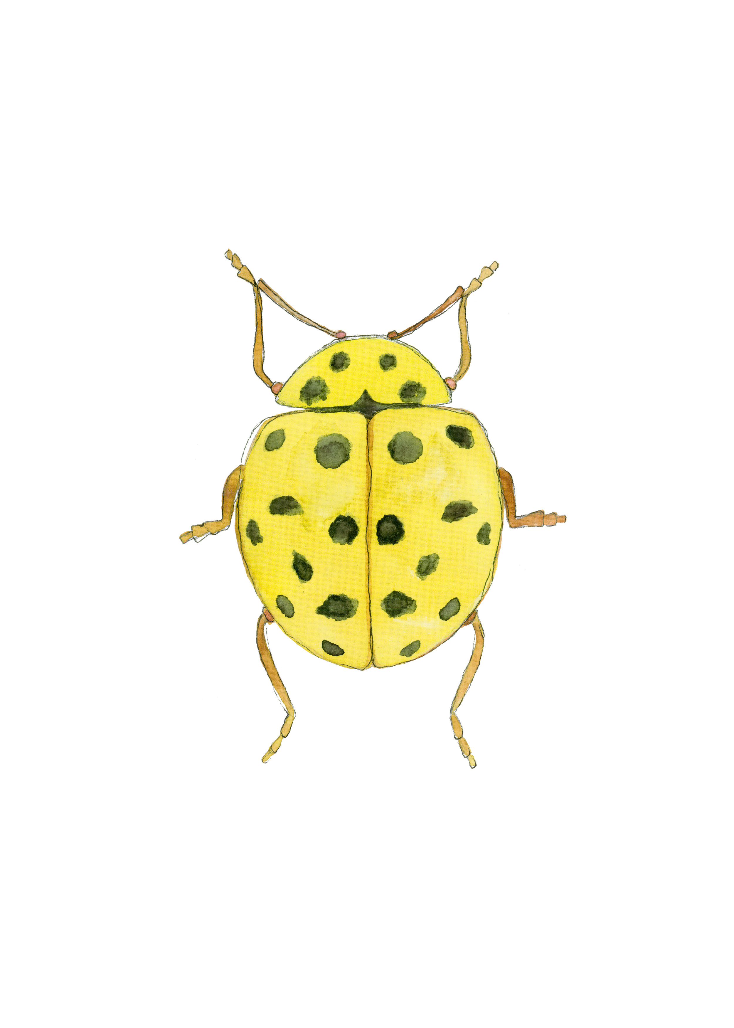 Beetle Yellow.jpg
