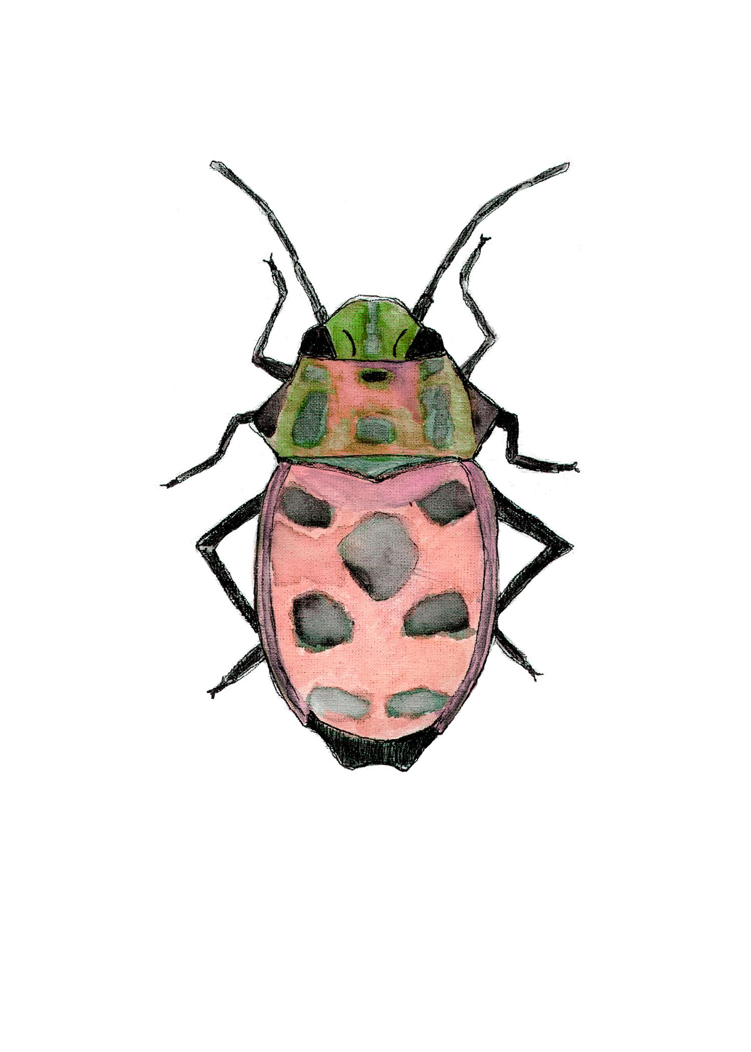 Beetle1 Red.jpg