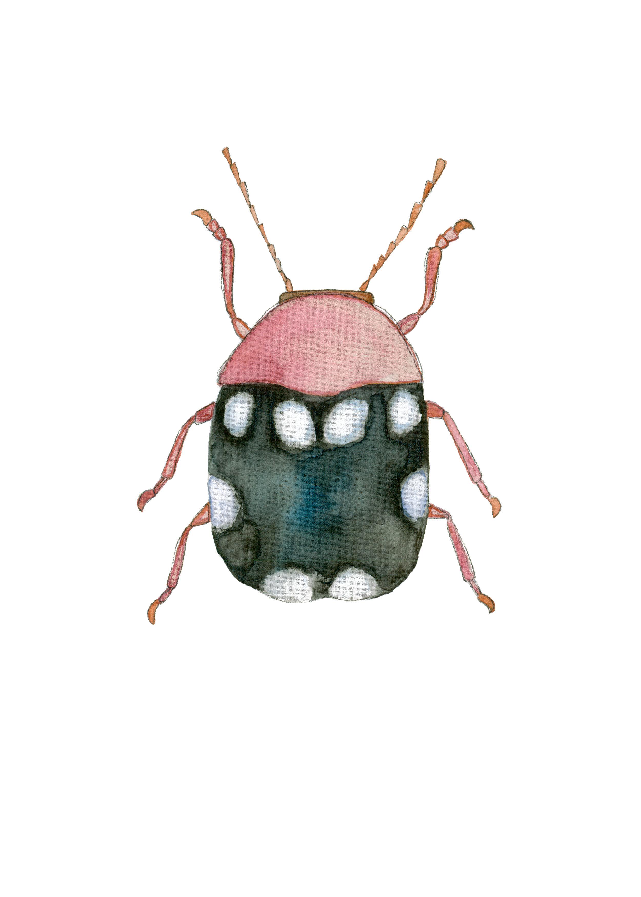 Pink and Black Beetle.jpg