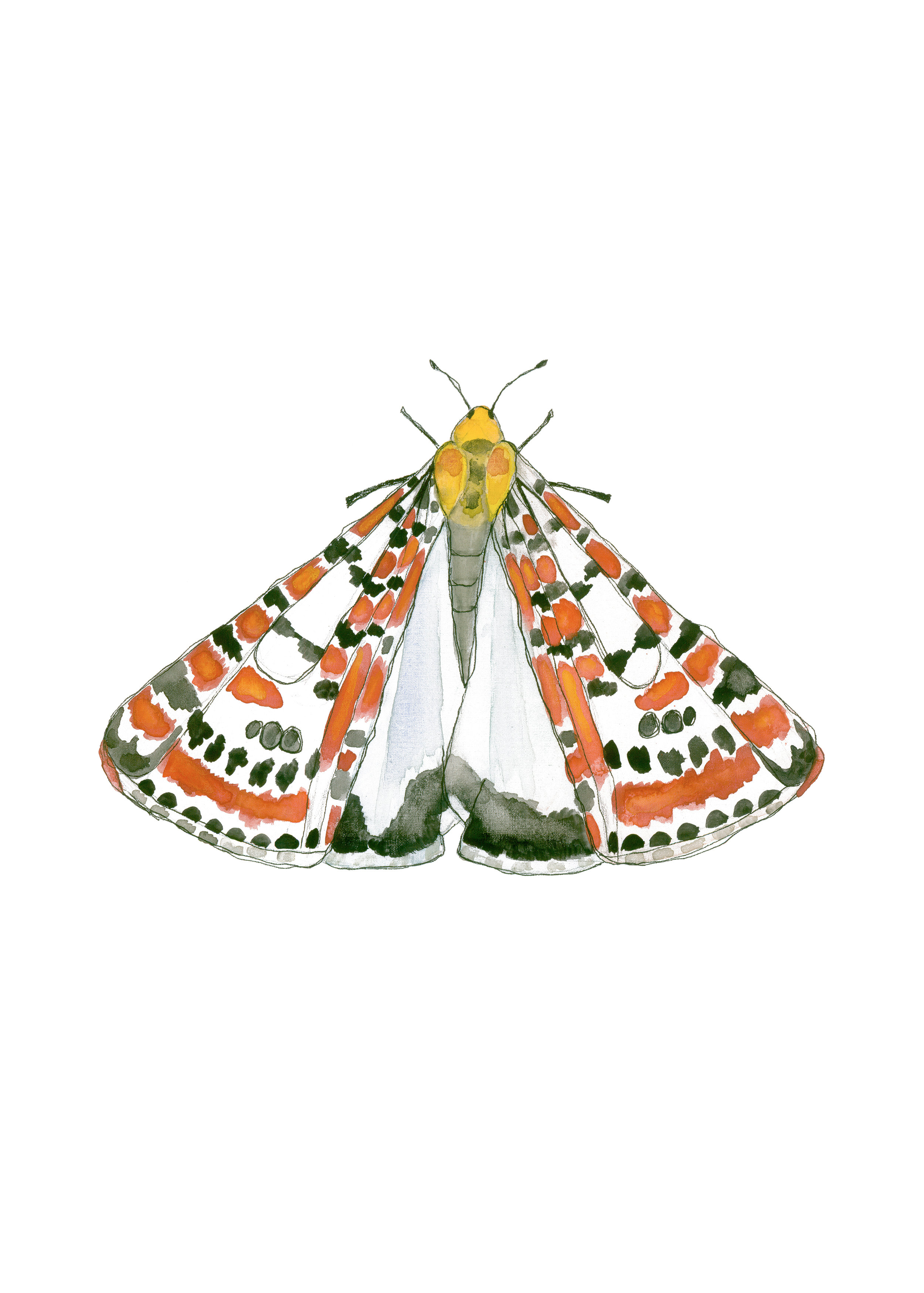 Crimson Speckled Moth.jpg