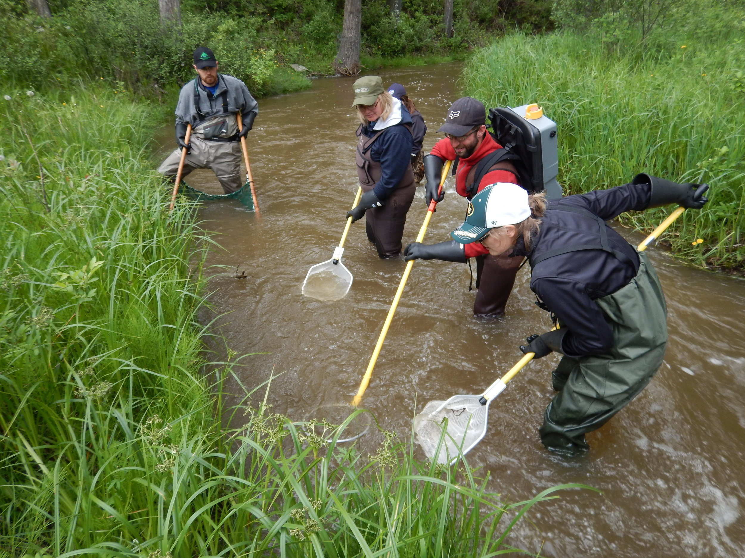 Electrofishing Certification — NRTG