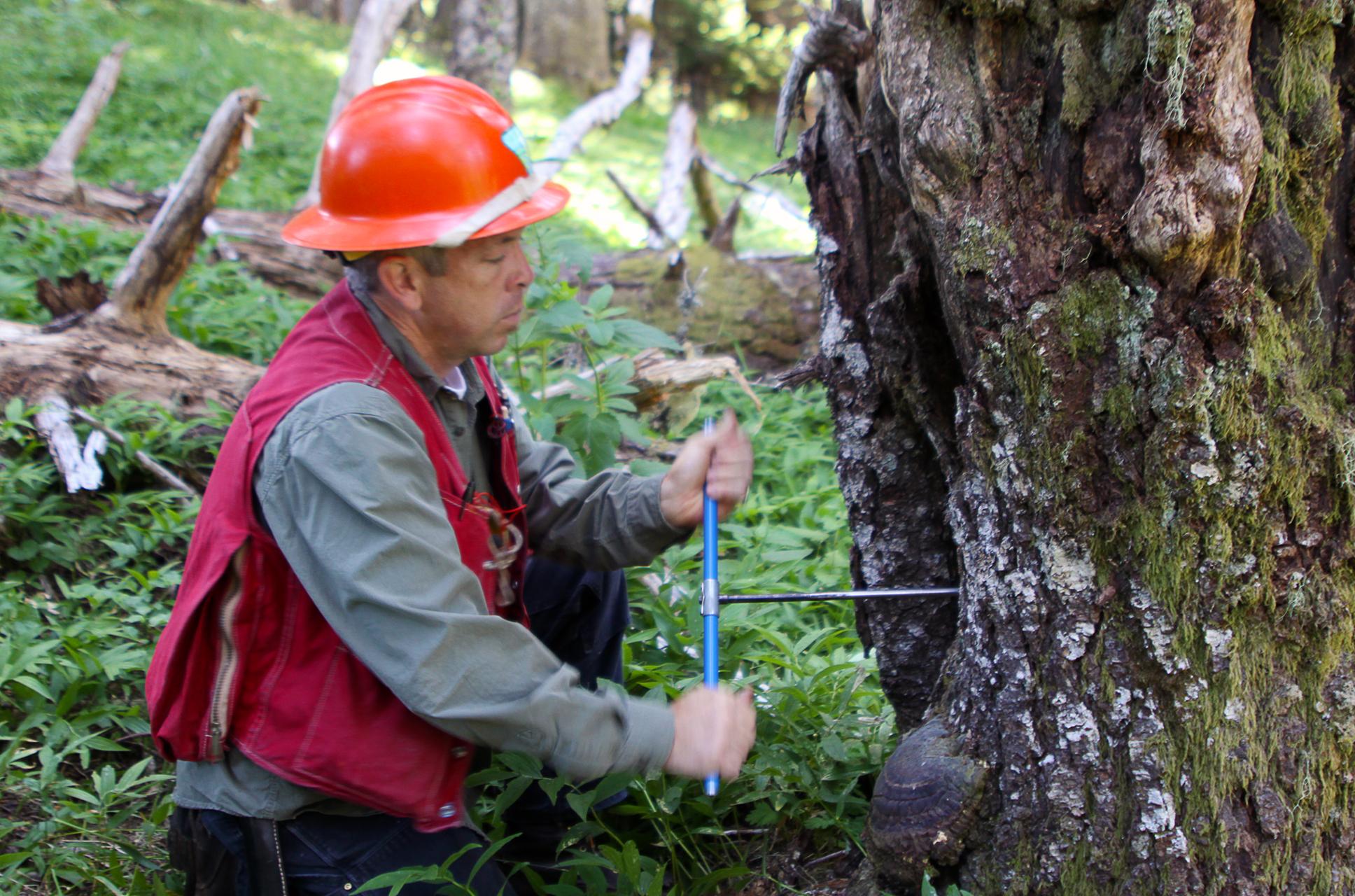 Forestry tech_FoFS.jpg