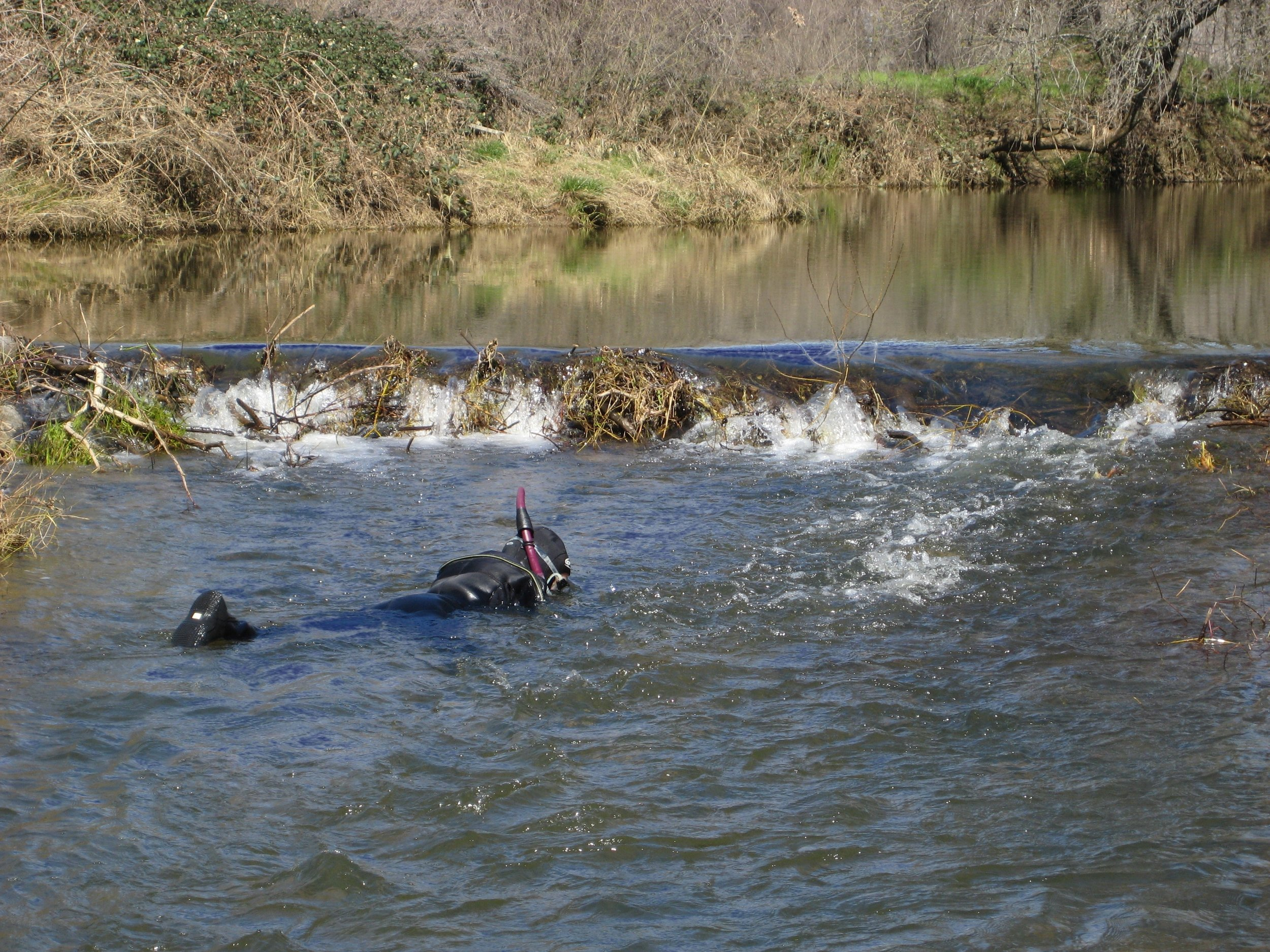 Fish Inventory Methods photo 1.jpg