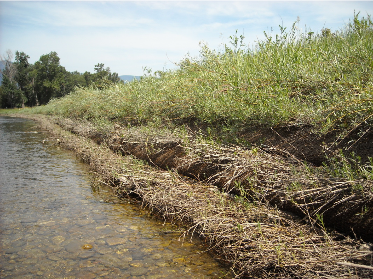 ECB willow staking stream edge.png