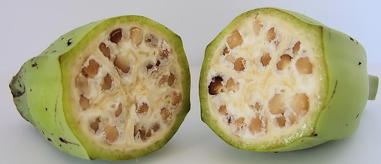 Gros Michel seeds