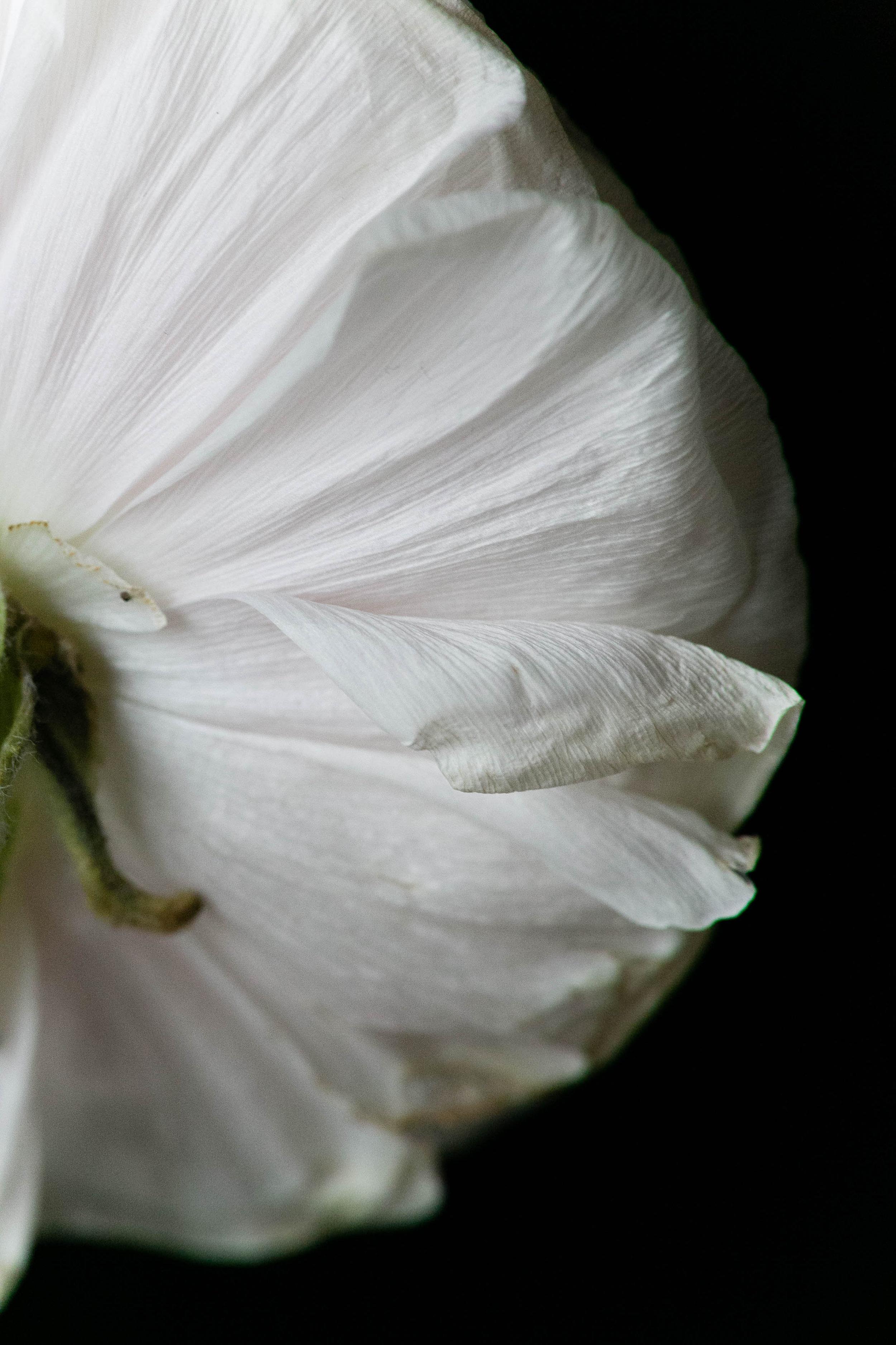 Flowers by Fleur Inc, Photo by Emilia Jane Photography