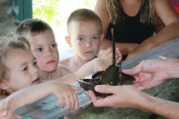 SSC_Horseshoe_Crab_Touch_Tank_Web_210-179x120.jpg