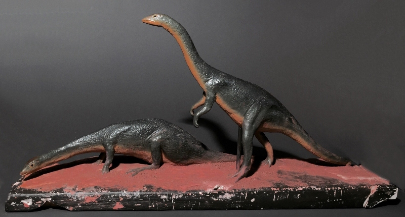 Anomoepus scambus  ( longicauda ). This species was an herbivore and is known for having bird-like feet.