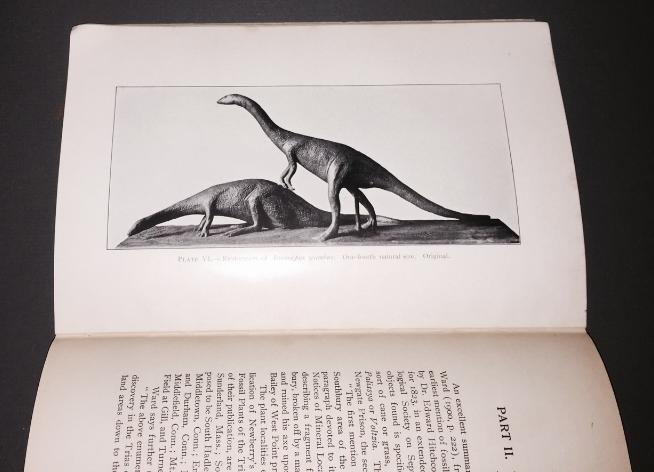 Anomoepus scambus  (  longicauda  ) illustrated.