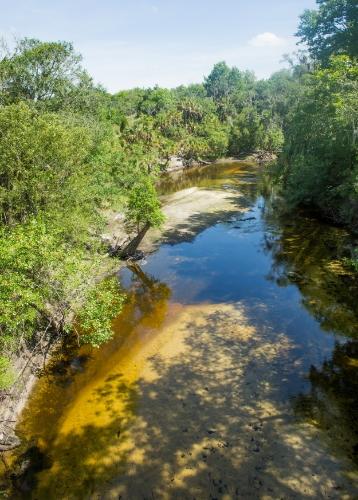 Alafia River. Photo by Bruce D. Colin.