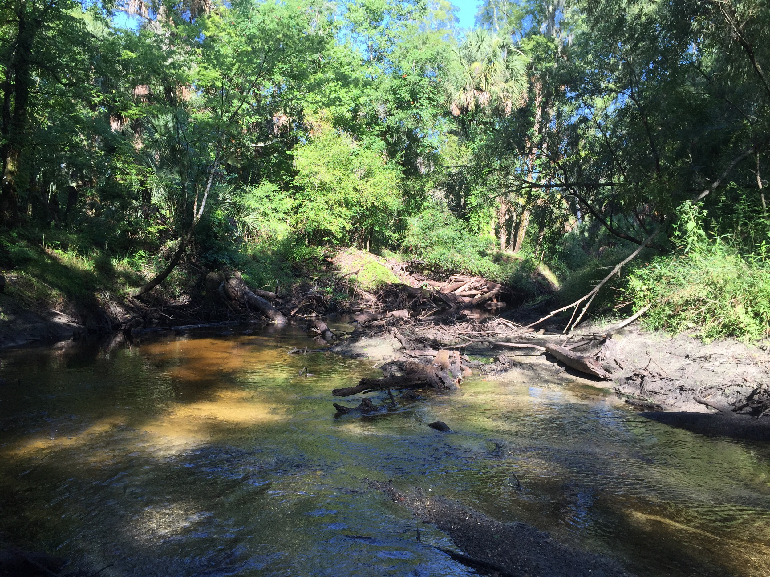 A small stream flows into the Alafia River from last night's rainstorm.
