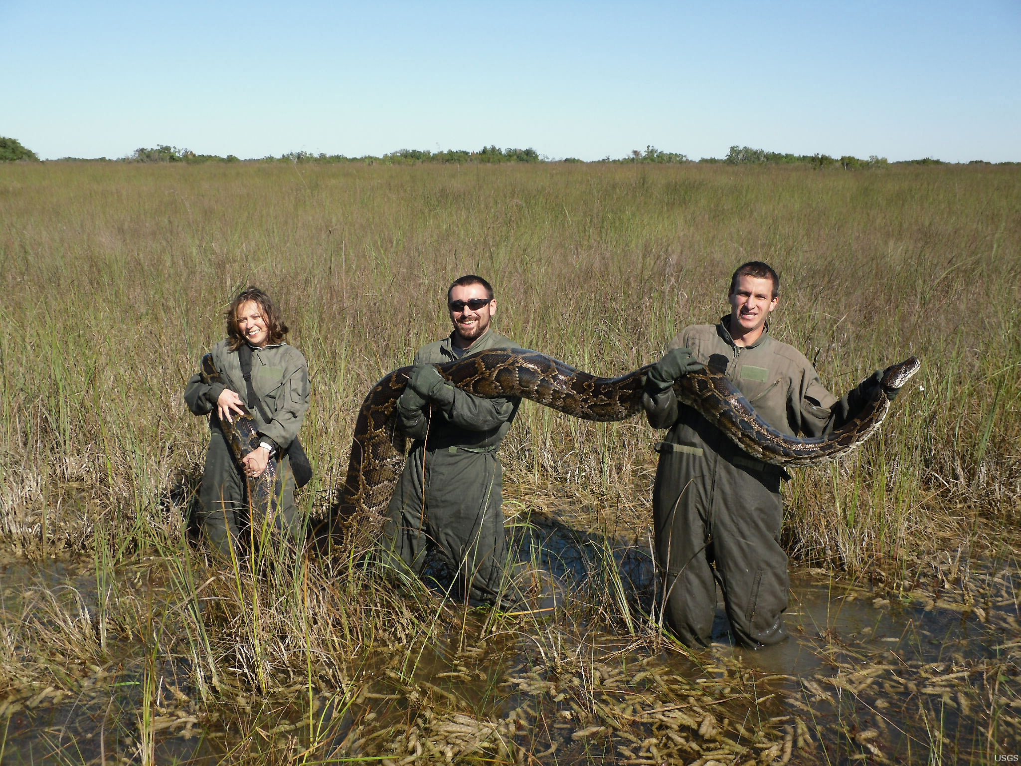 This 162 lb python was captured in the Everglades in 2009.