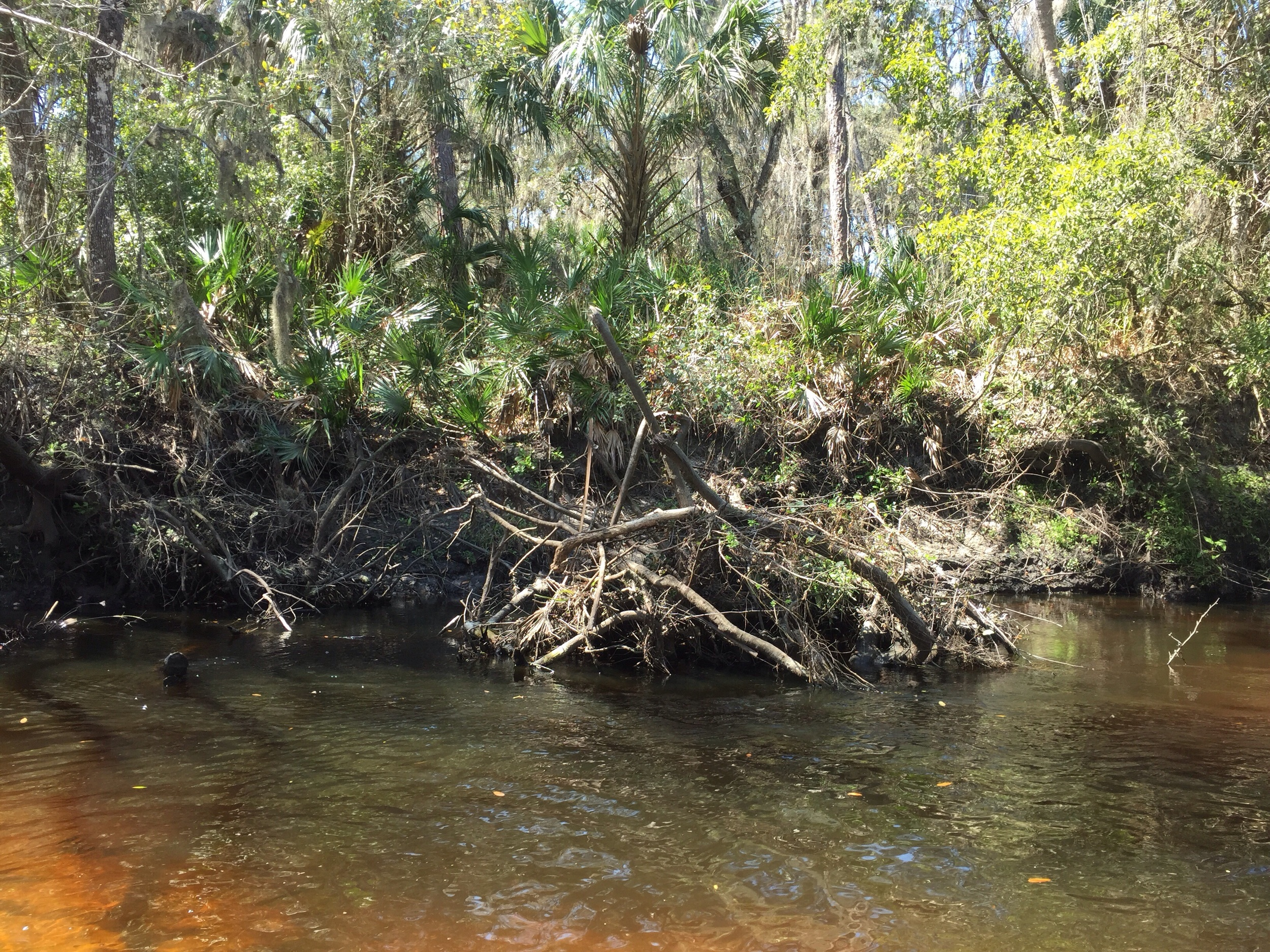 Snags such as this can provide great shelter for young turtles.