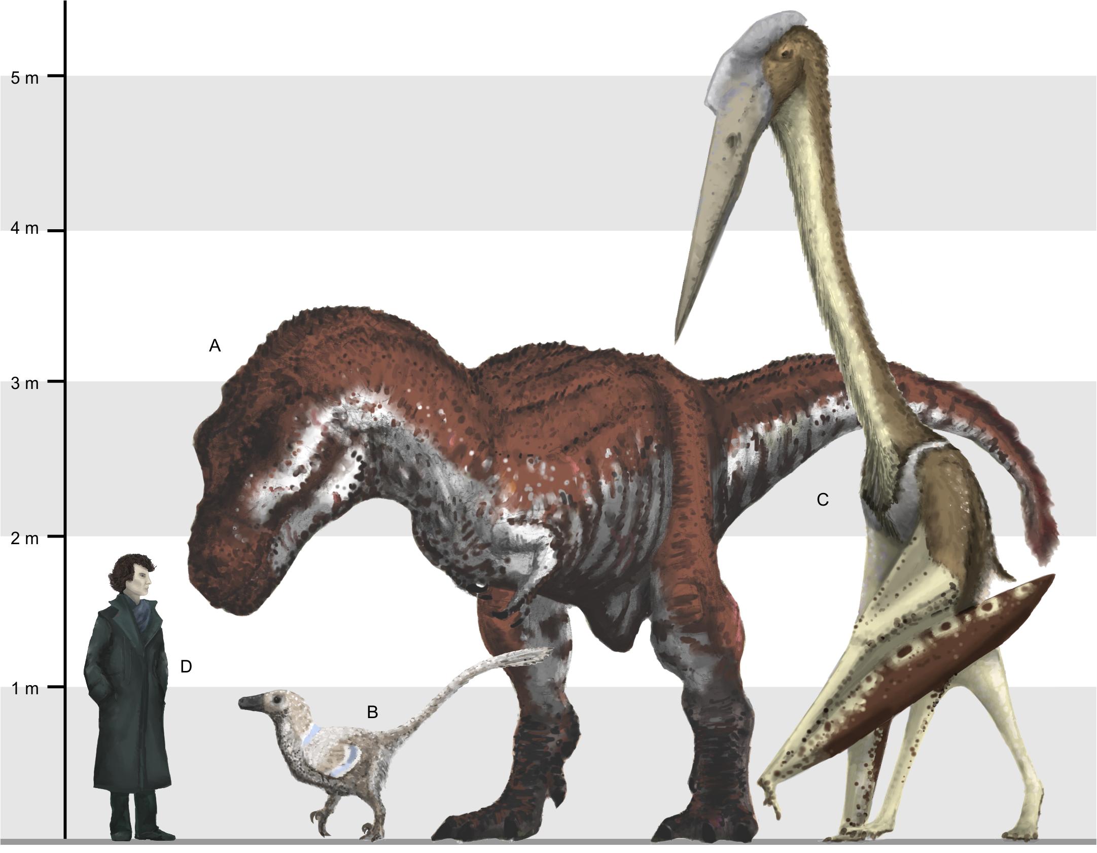 A)  Tyrannosaurus ; B) Small raptor  Balaur bondoc ; C) Azhdarchid pterosaur,  Arambourgiania philadelphie ; D) Human  Image by Mark Witton