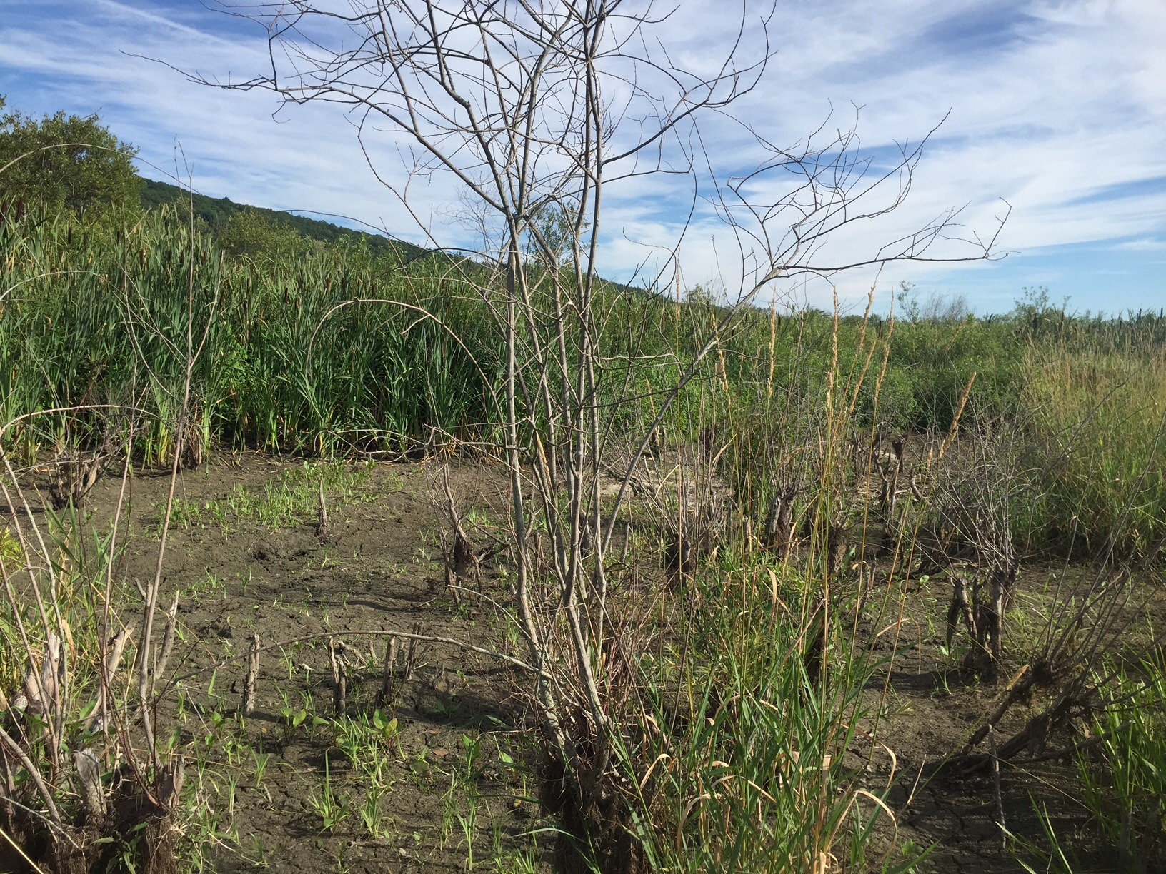 Swampy area currently dry from the summer heat.Photograph by Timothy J. Walsh