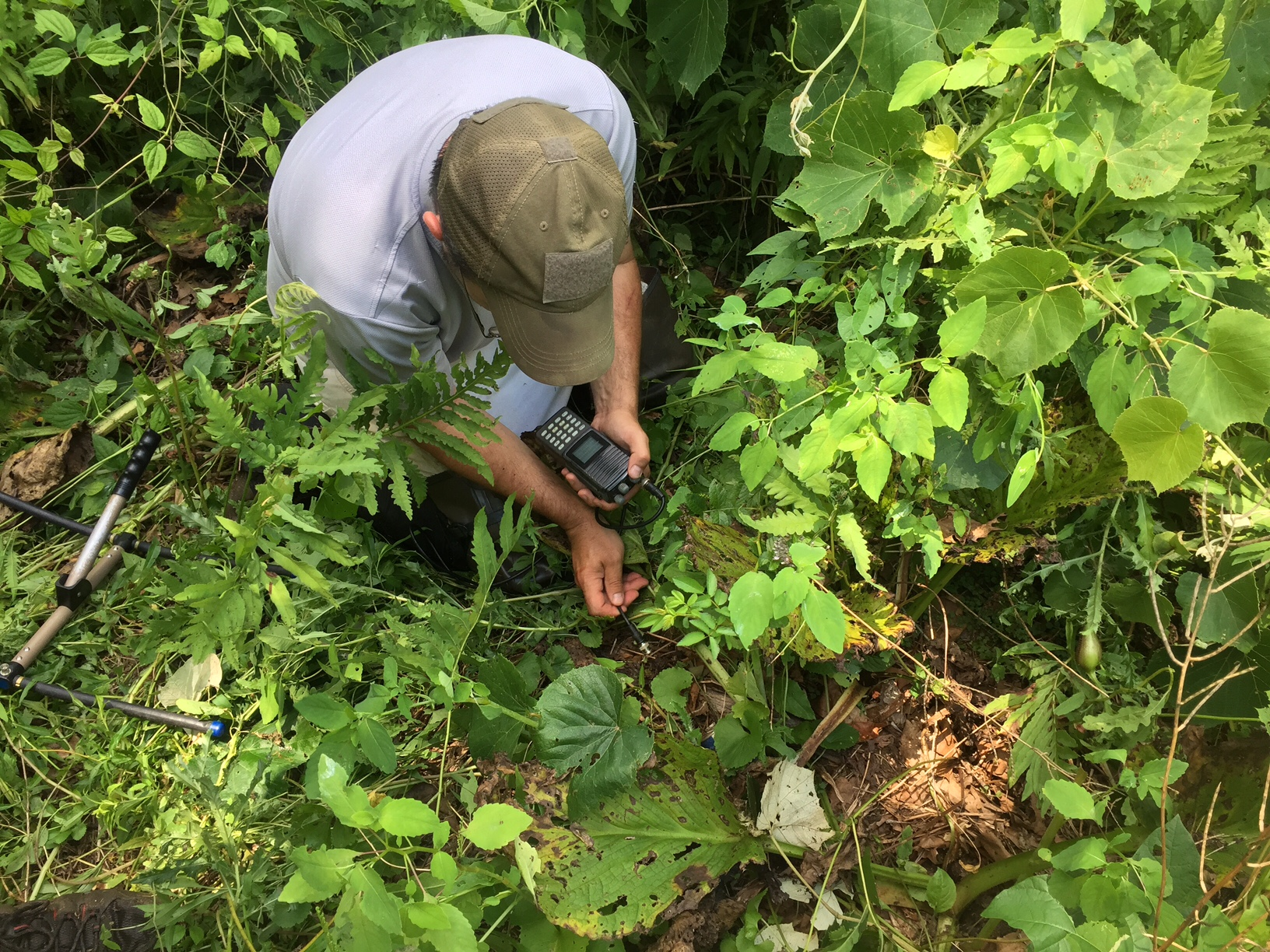 John attempting to pinpoint the location of a small three year old wood turtle. Photograph by Timothy J. Walsh