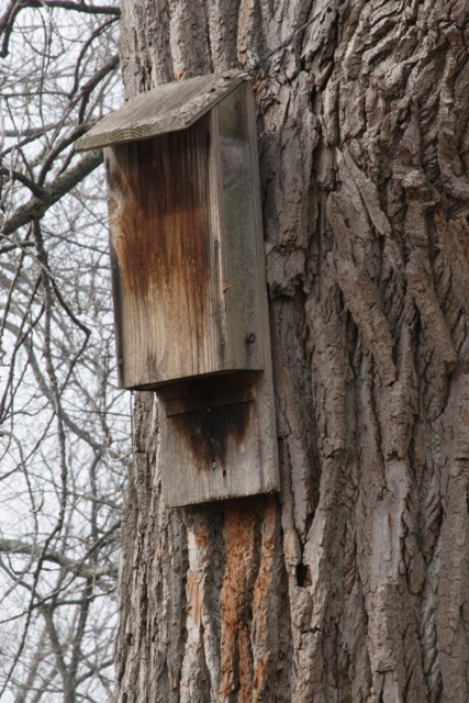 A bat house. Photo by Robert Lawton.