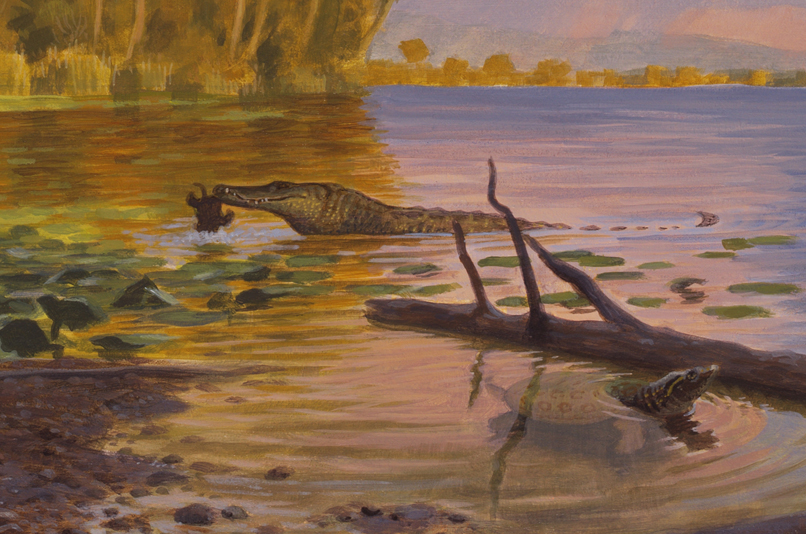 This image from our Secrets of Fossil Lake exhibition shows the crocodilian   Borealosuchus  preying upon a turtle 52 million years ago. Image by Sean Murtha