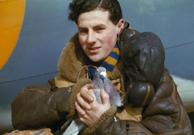 This brave WWII carrier pigeon is being held by a crew member of a British bomber plane.