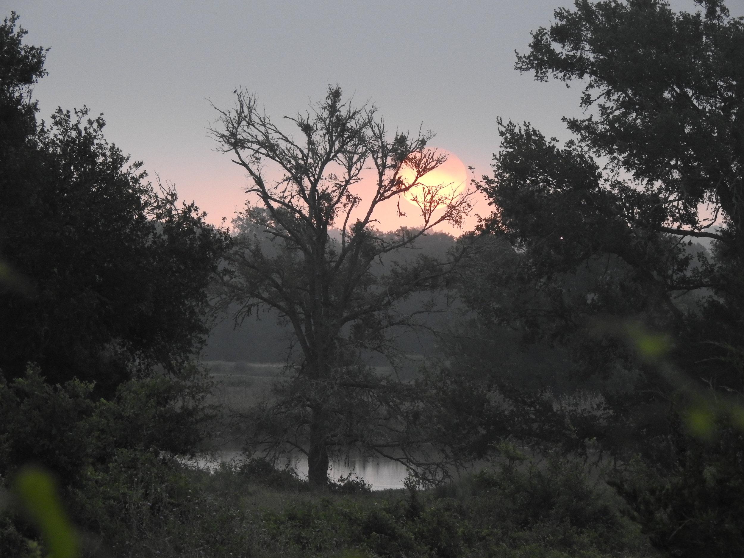 sunrise (1).JPG