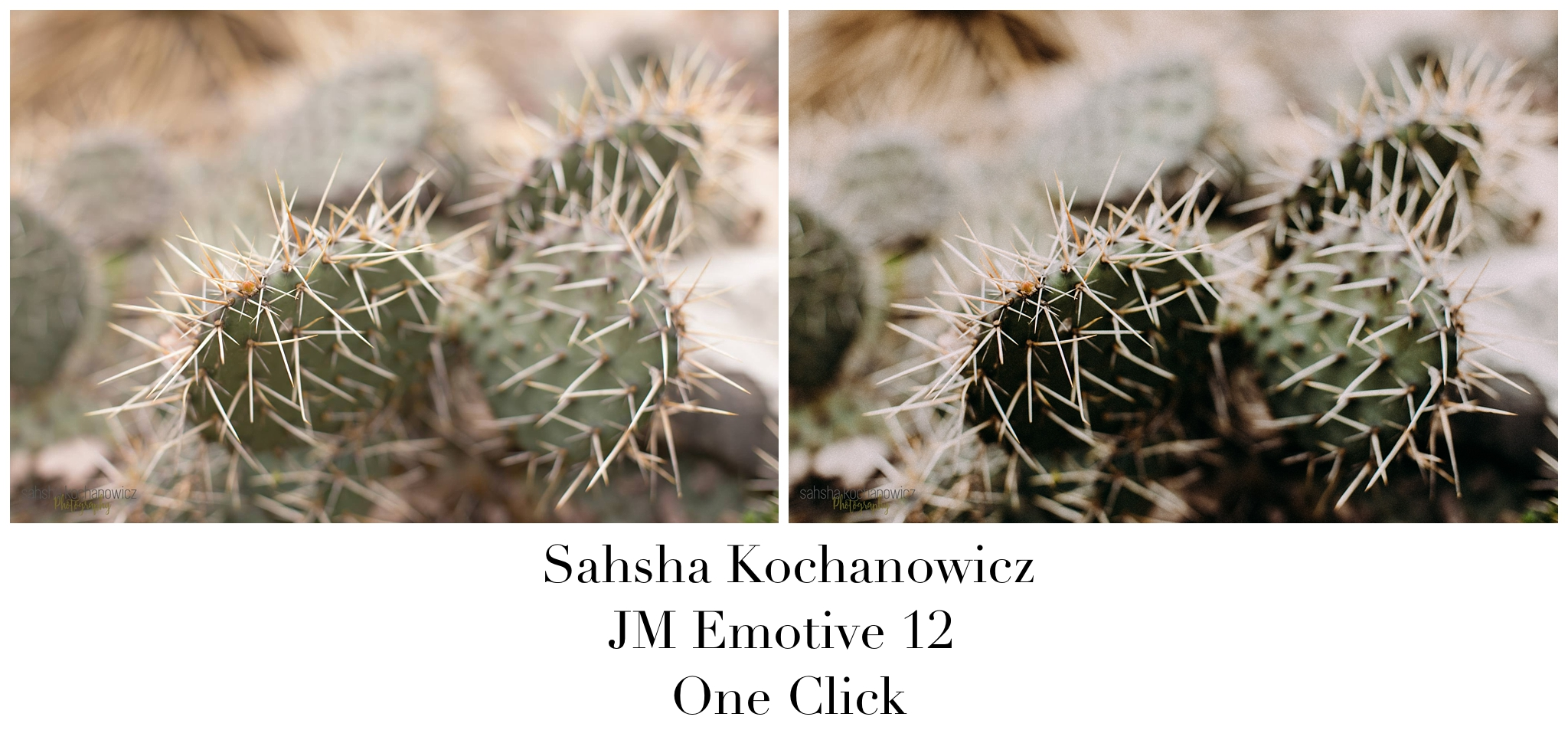 Sahsha Kochanowicz