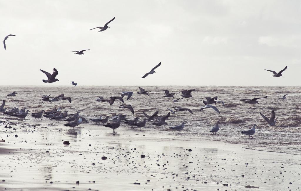 Autumn tide.jpg