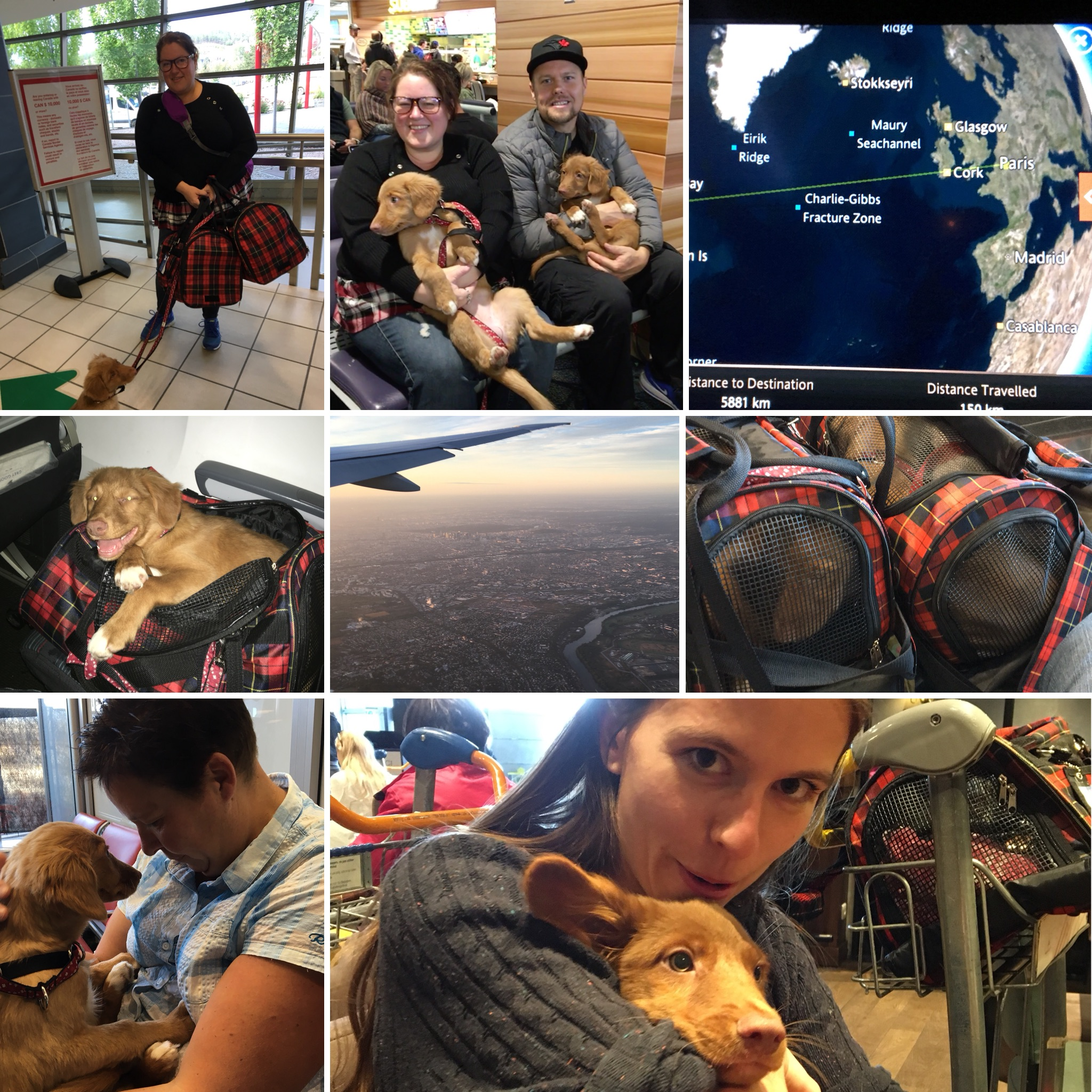 Photos from our recent delivery trip to Paris for the JoyRide litter's Rover and Shelby. The loving owners met us at the Charles de Gaulle Airport in Paris and travelled onward to the south of Germany and Edinbugh, Scotland.