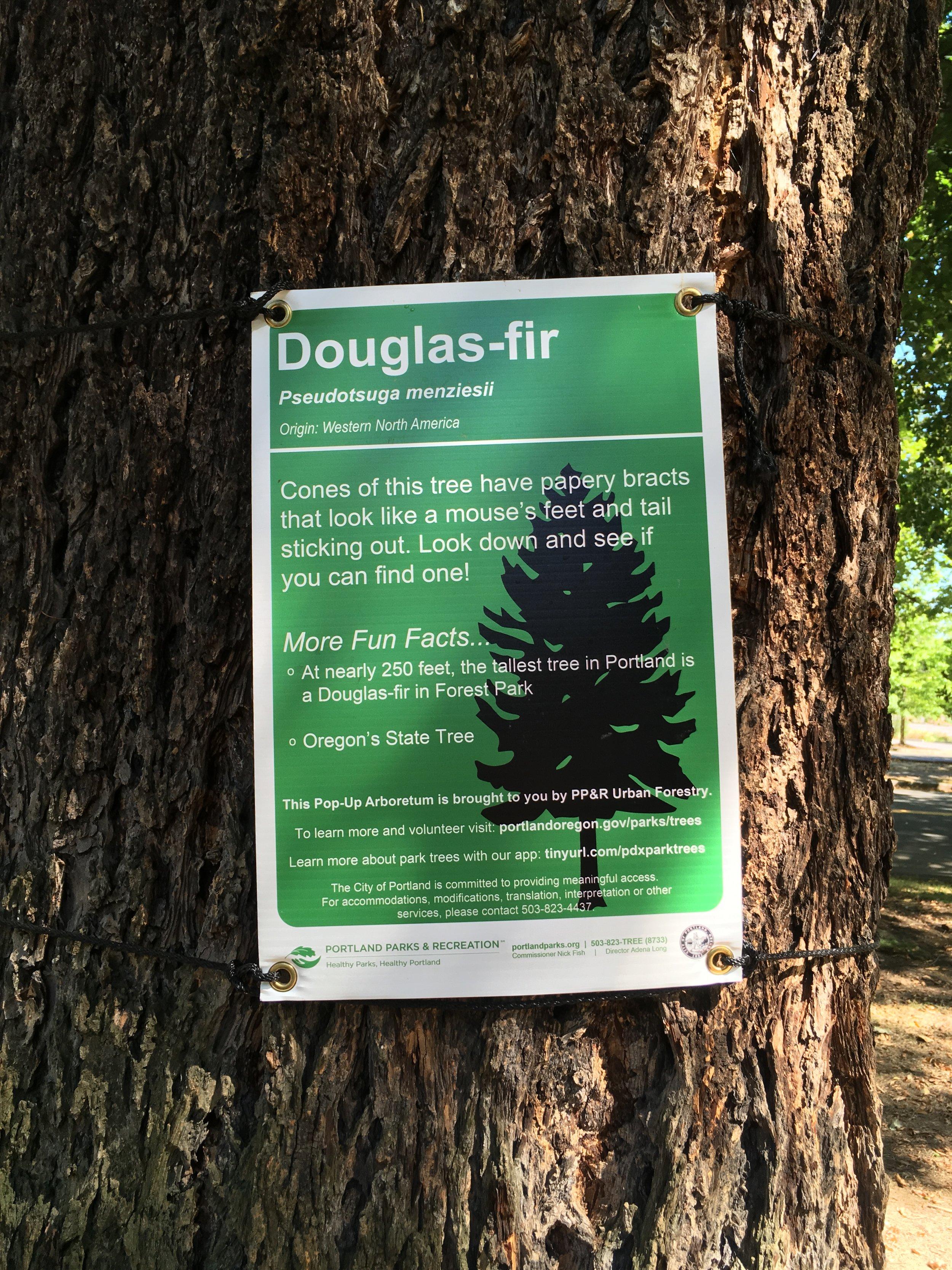 2019-09 Holladay Park Arborist Tree Sign 02 Douglas Fir.JPG