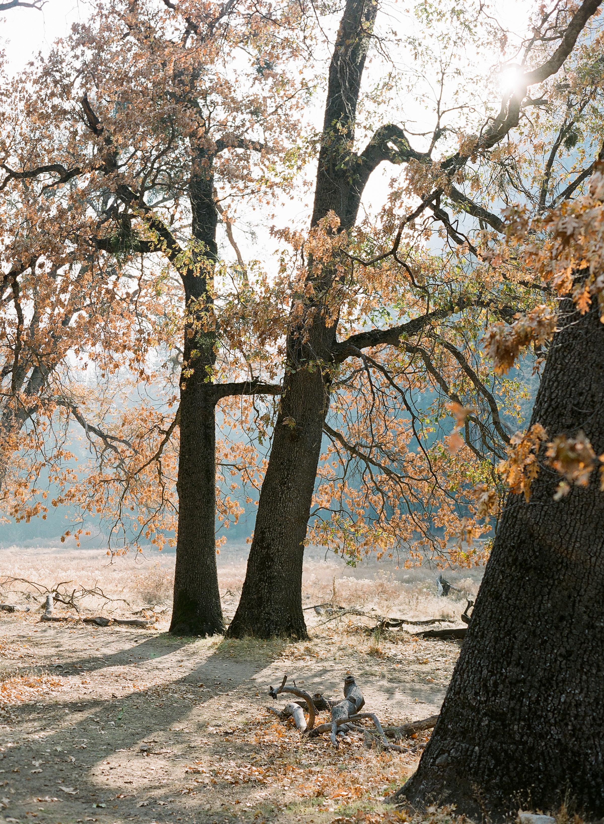 Brandon Sampson-2018-11-Yosemite-17.jpg